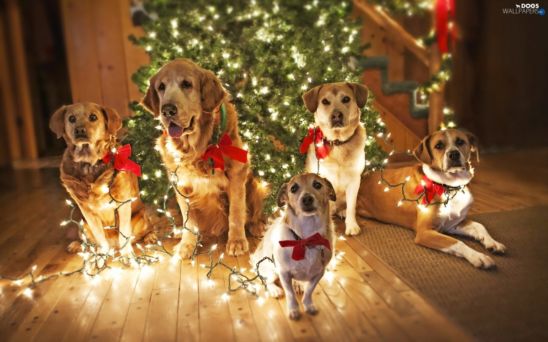 1920x1200 christmas, lighting, puppies, christmas tree