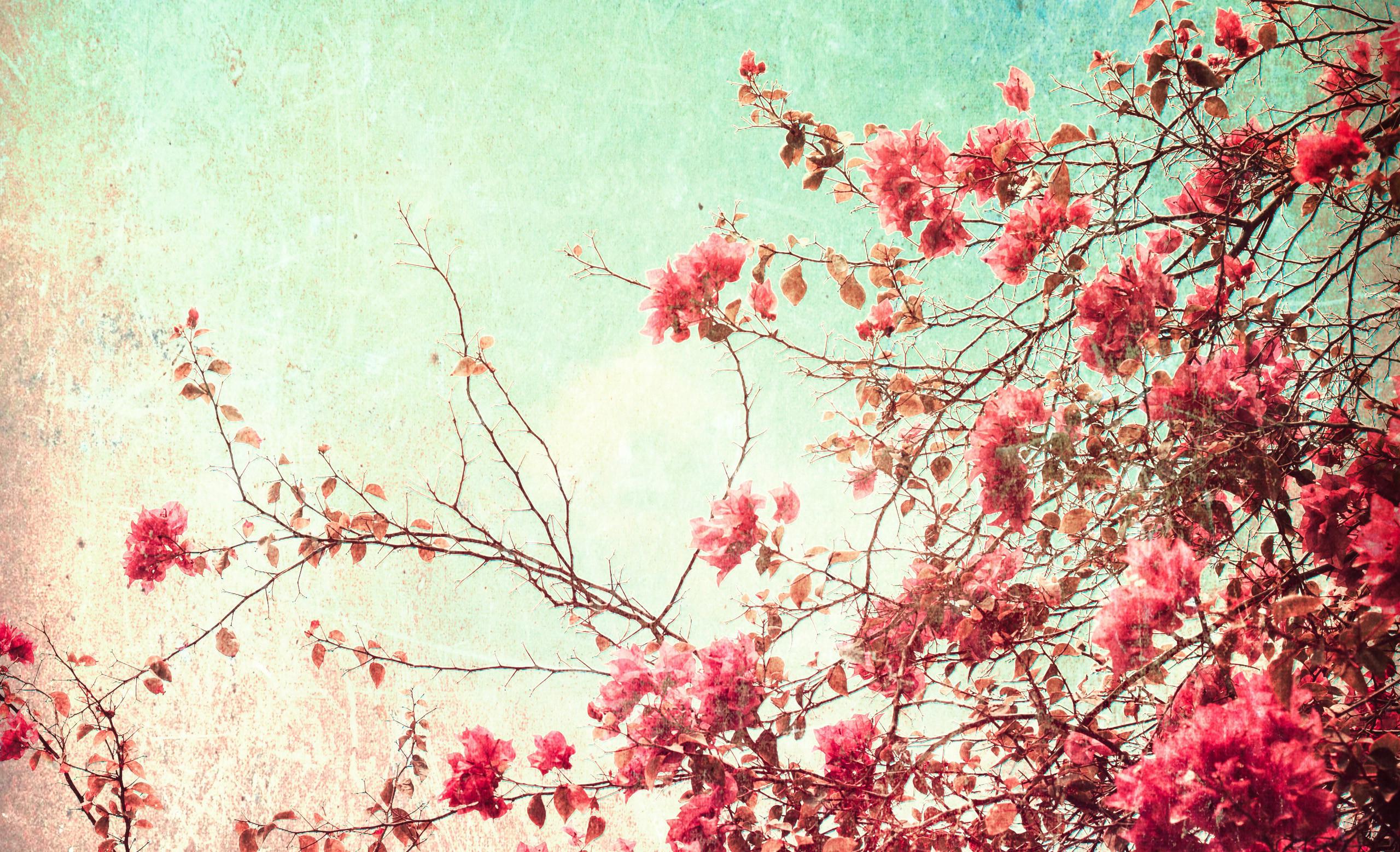 Floral Desktop Backgrounds 51 Images