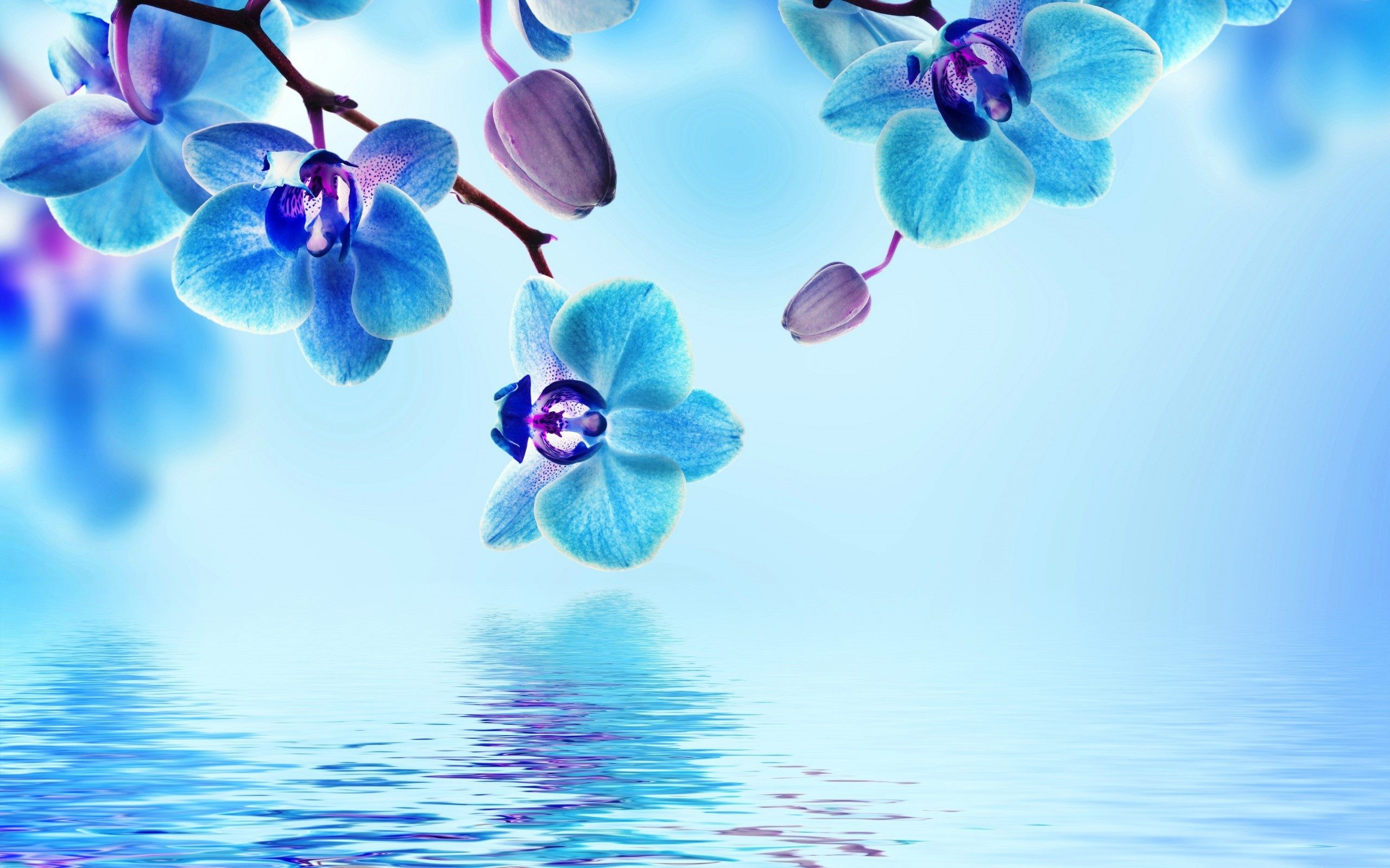 2560x1600 Blue Flower Wallpapers Photo