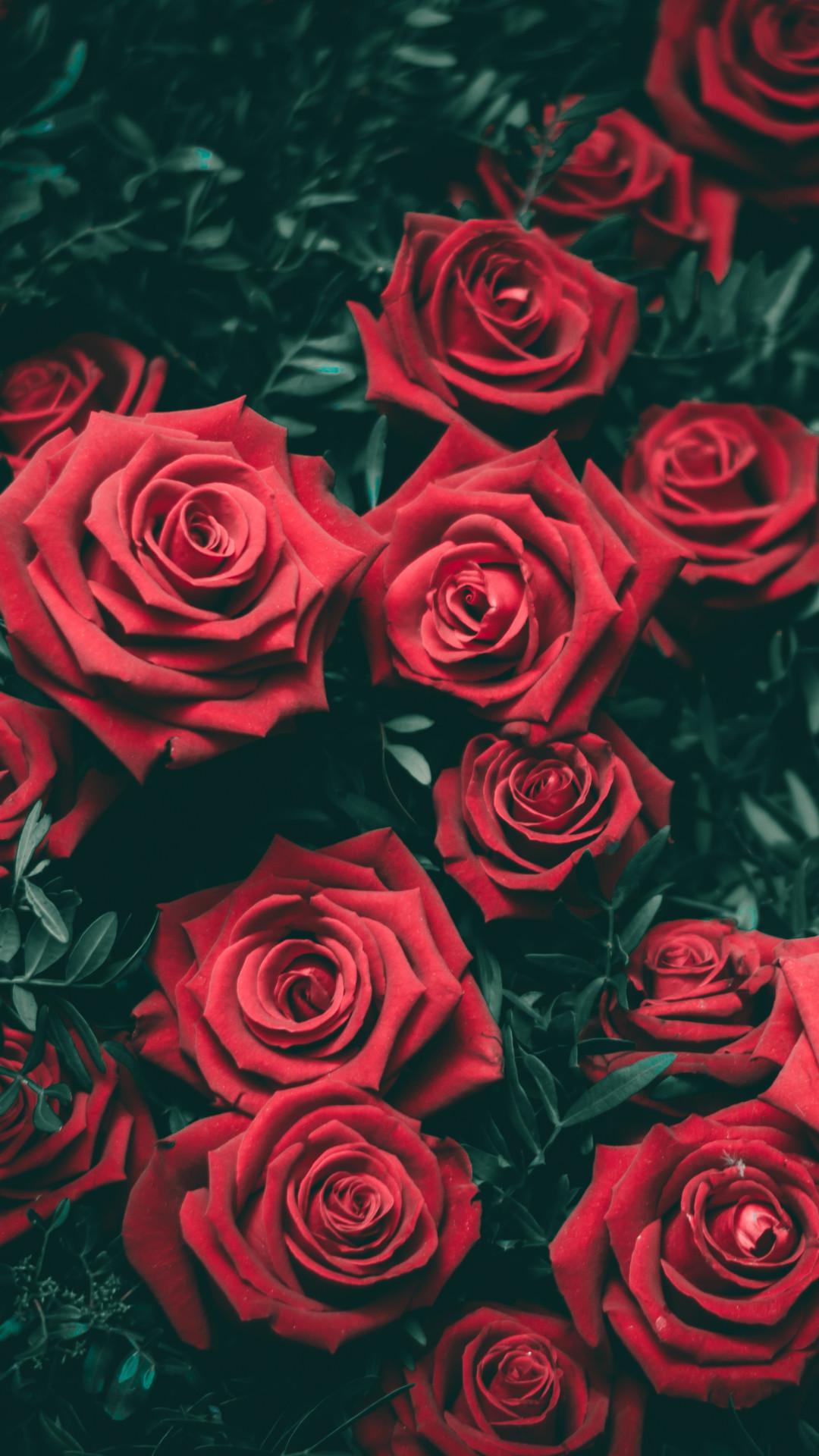 1920x1080 Red Rose Wallpapers Desktop Wallpaper