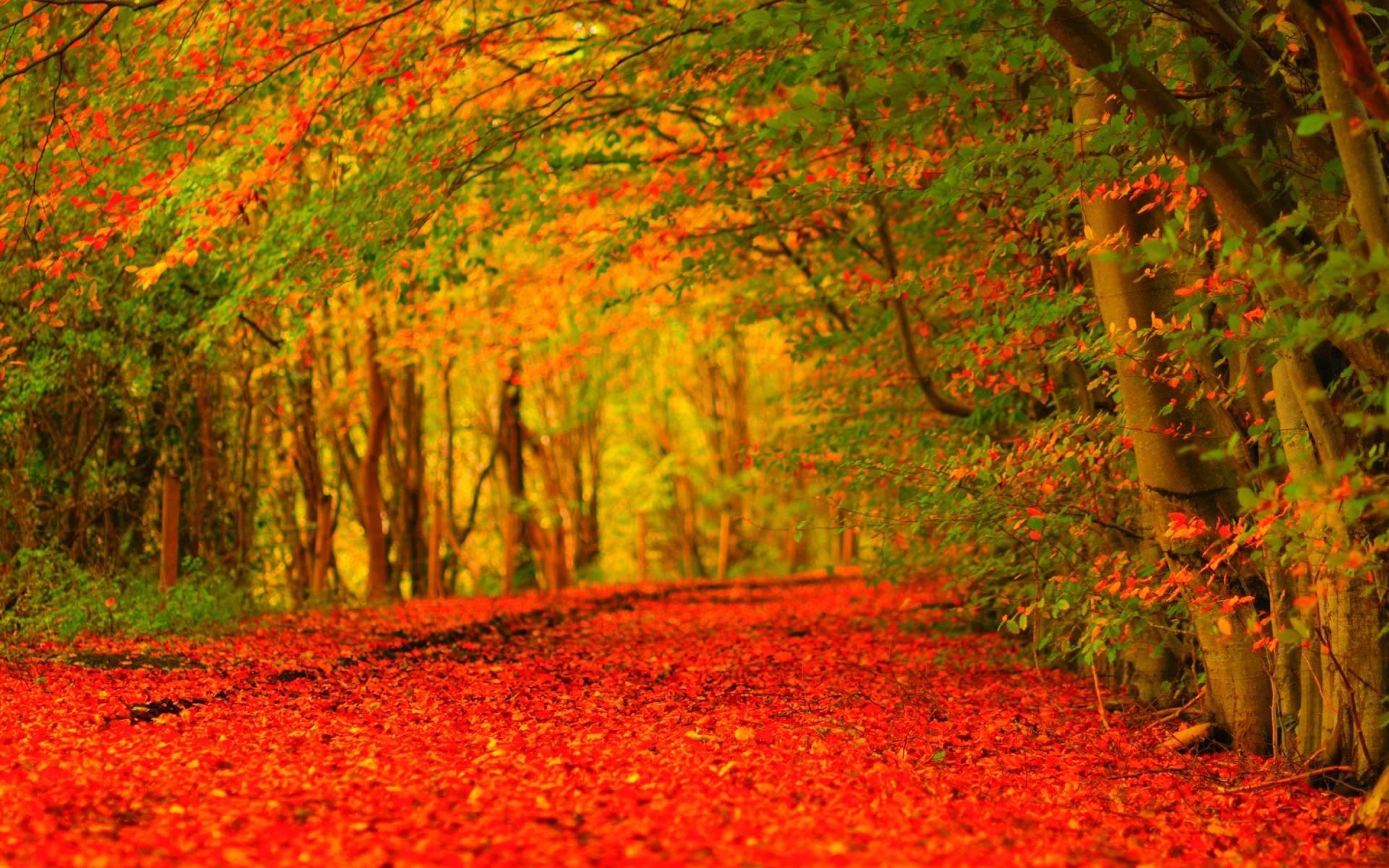 Autumn HD Widescreen Wallpaper (71+ images)