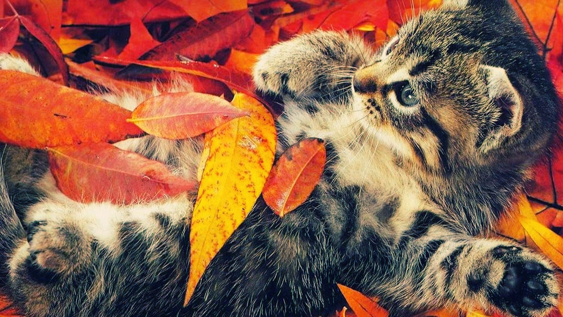 1920x1080 autumn wallpaper life animal wallpapers backgrounds