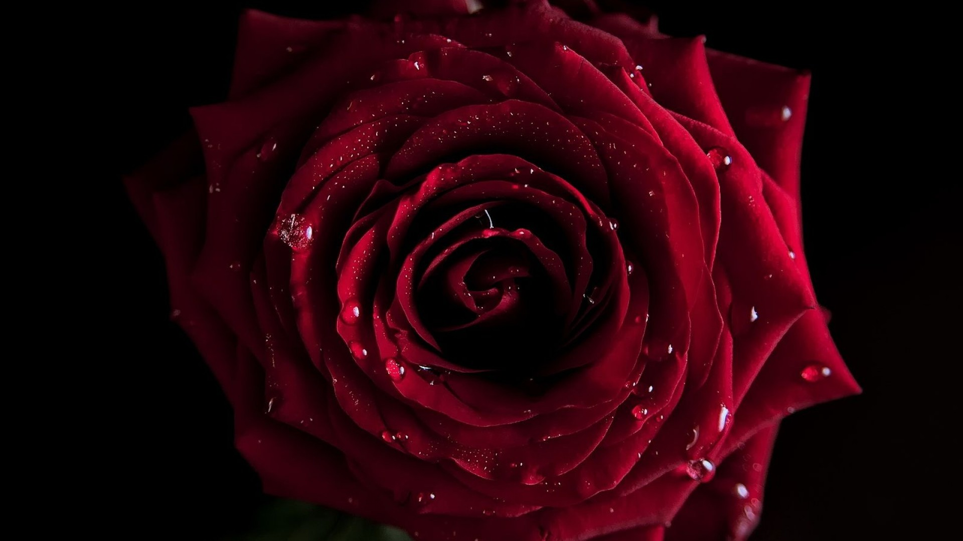 1920x1080 Red Roses Wallpapers HD A39 dark