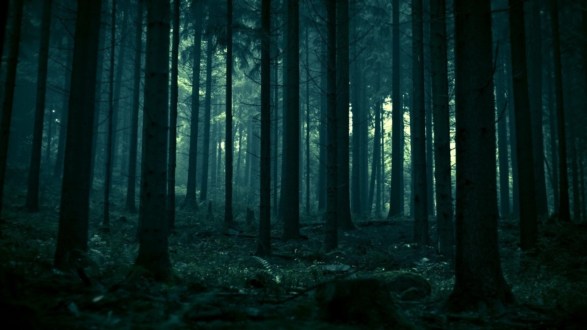 1920x1080 1920 x 1080 px free screensaver wallpapers for dark forest by Camden Ross  for - TWD
