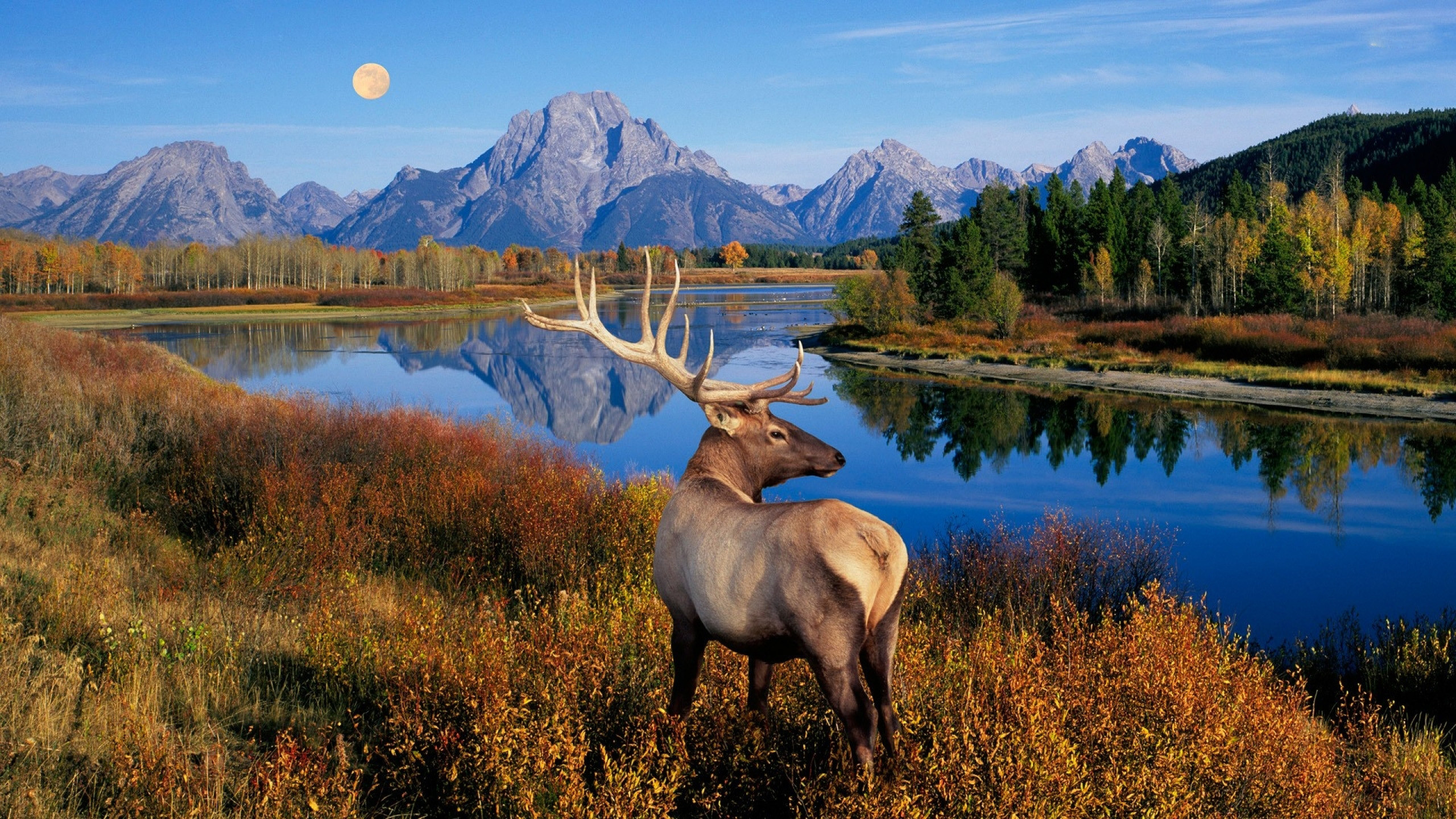 Elk Wallpaper (51+ images)