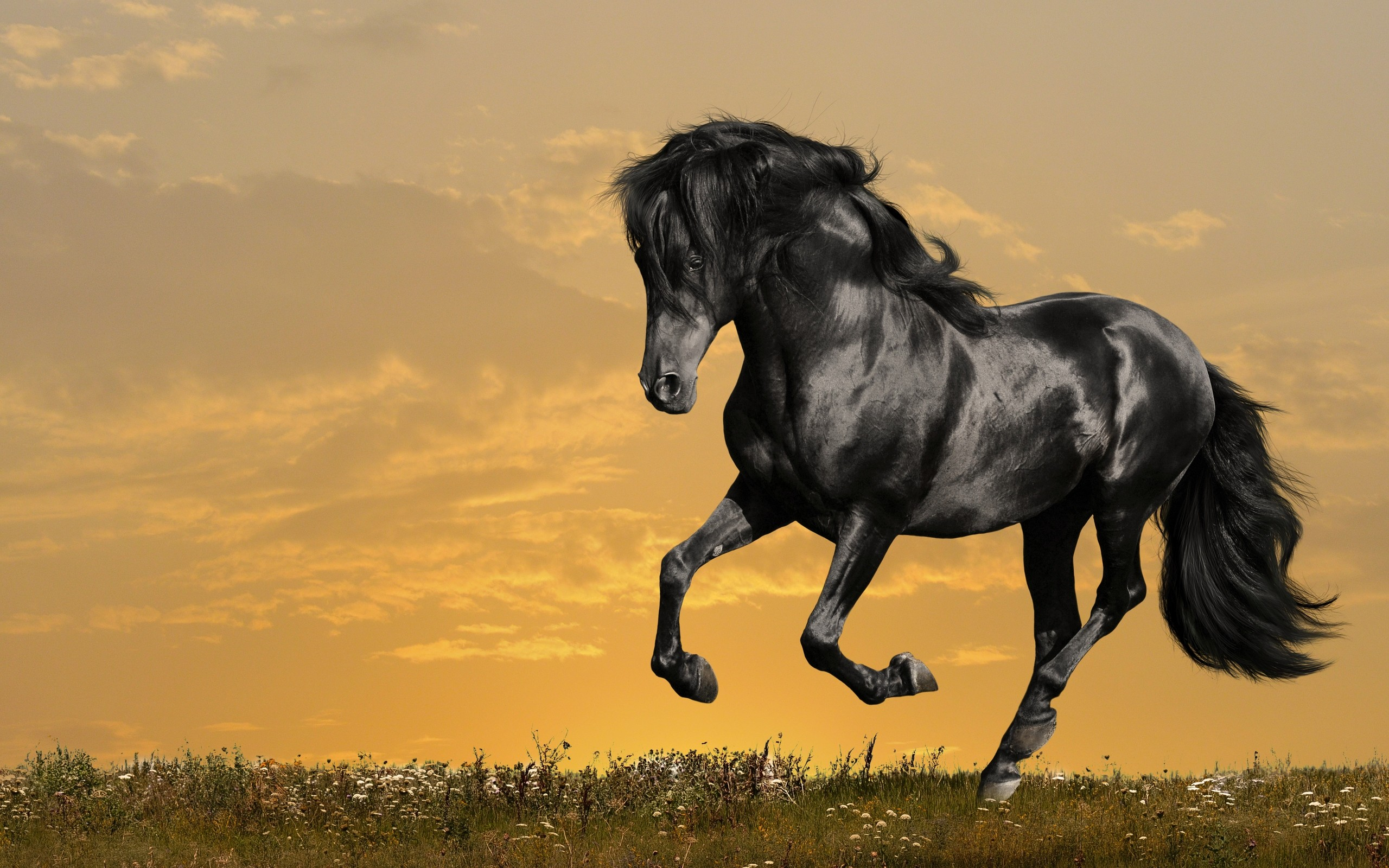 2560x1600 free Black Horse Running wallpaper, resolution : 1920 x tags: Black, Horse