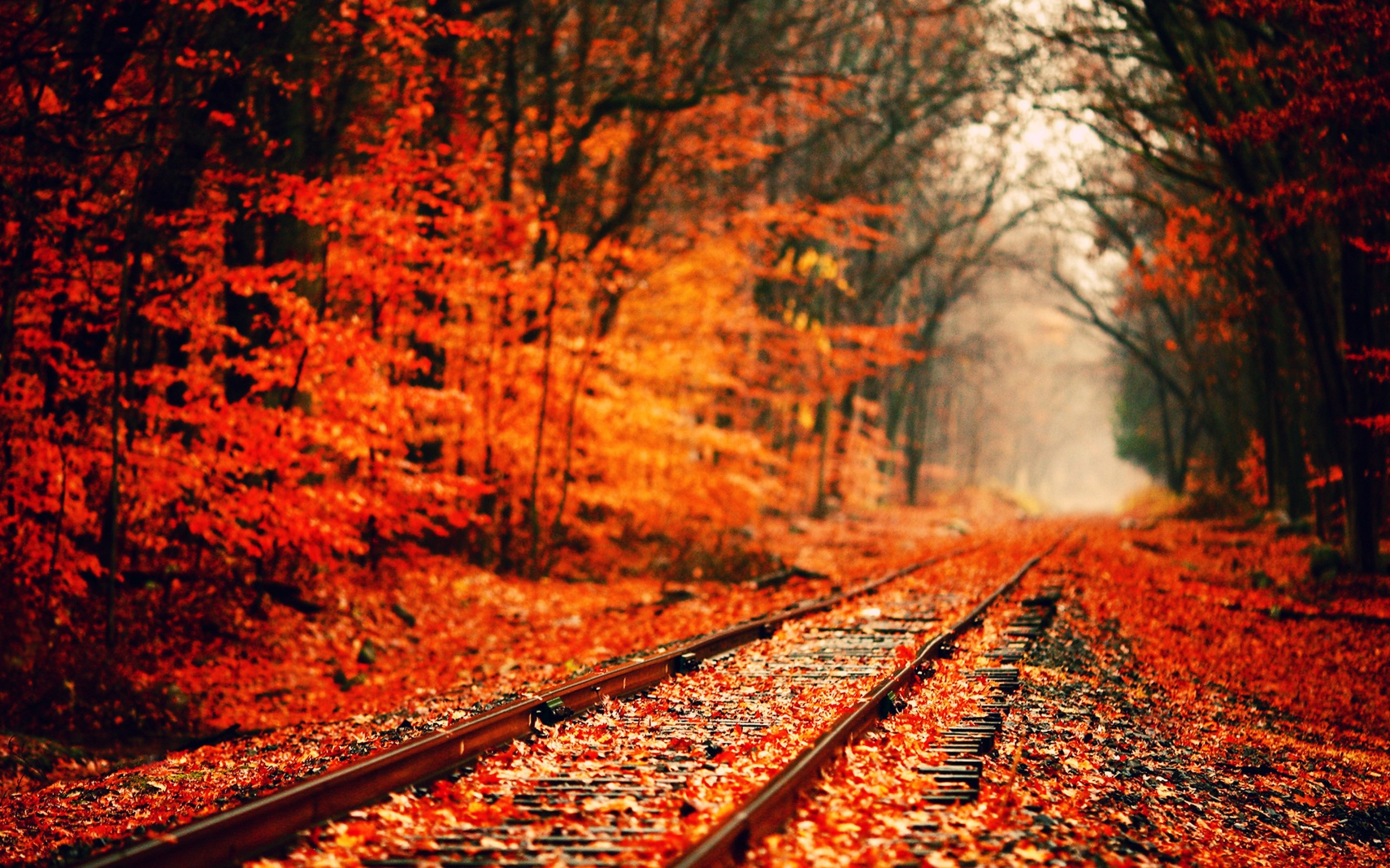 2560x1600 Autumn Wallpapers, Free Desktop Backgrounds - Wallpaper Path