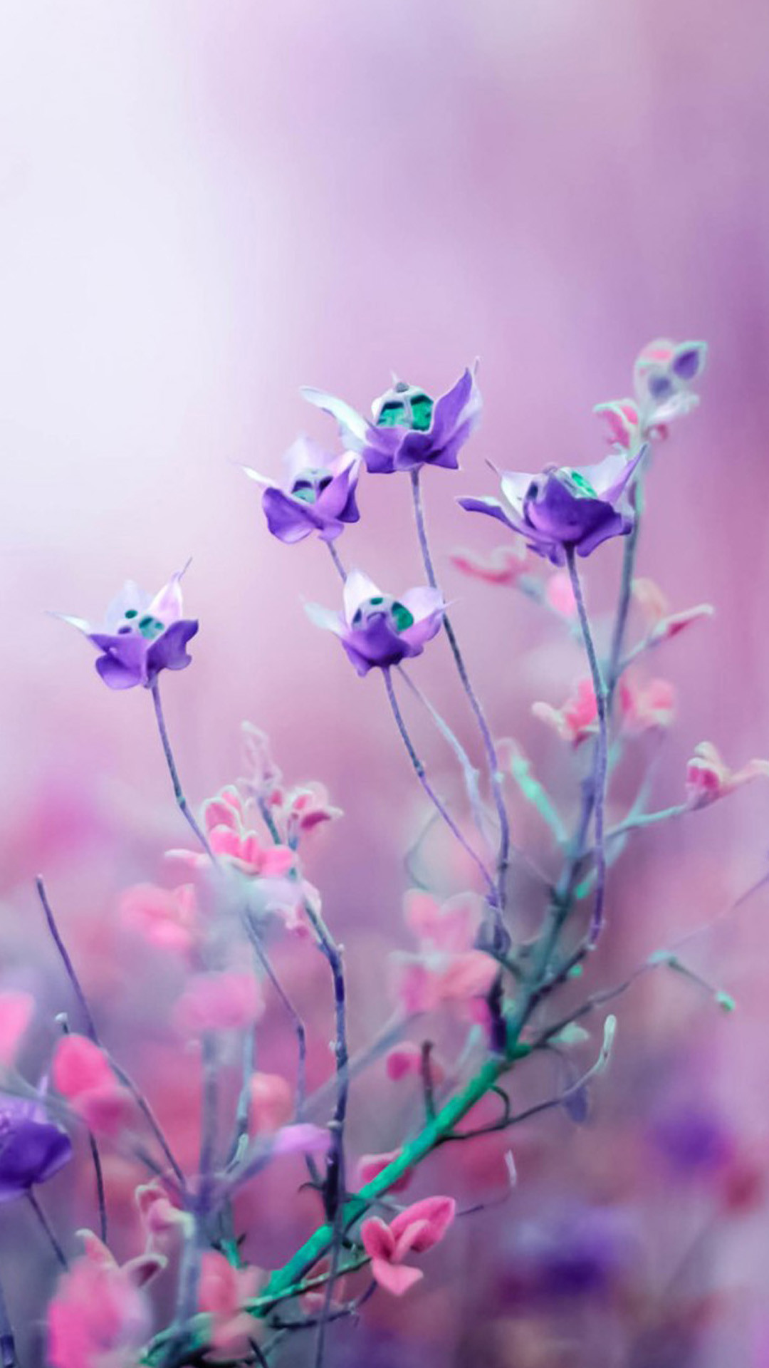 1080x1920 Download purple-and-pink-flower-iphone-7-wallpaper Wallpaper ...