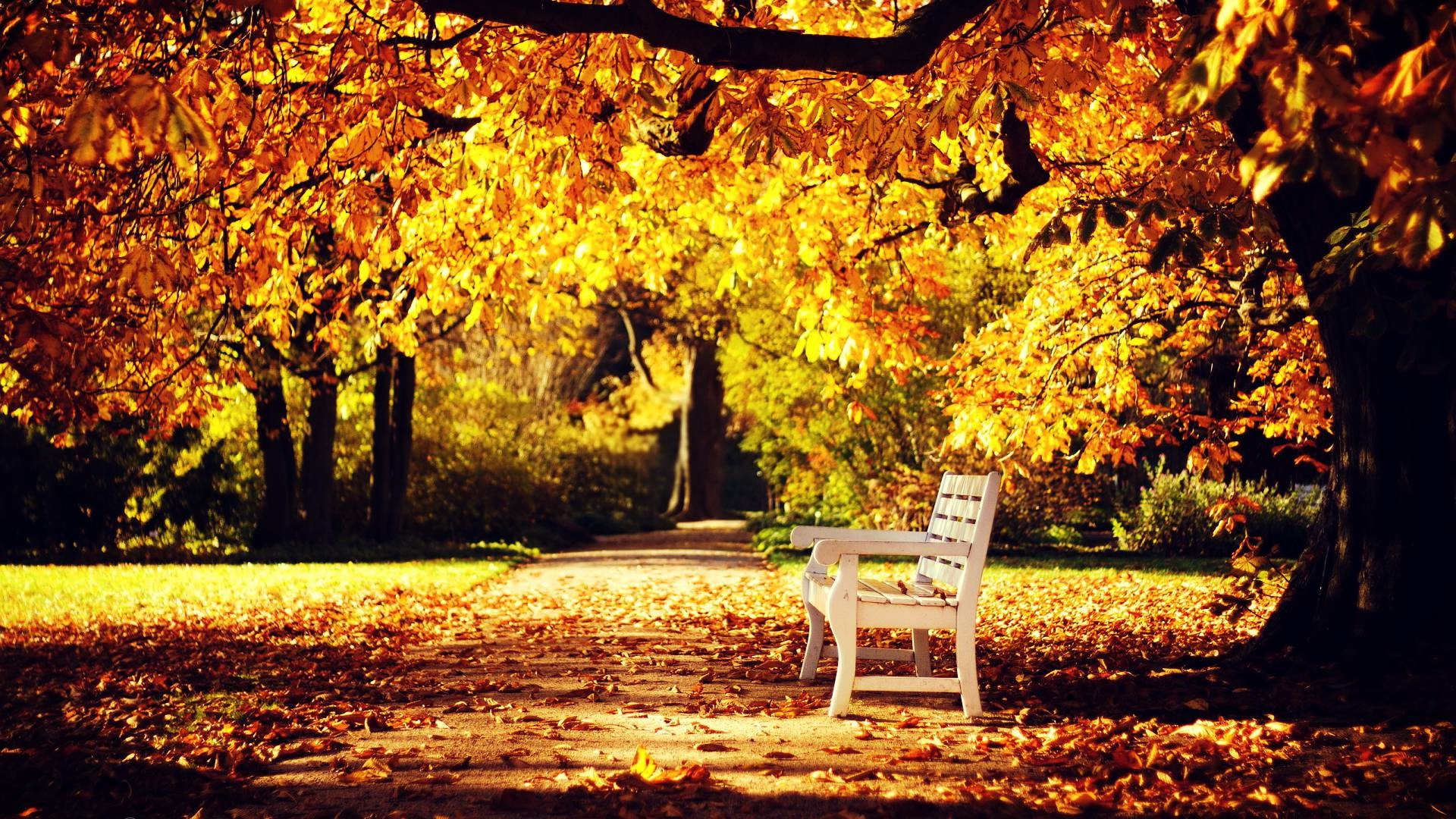 Autumn Hd Wallpapers 1080p 76 Images