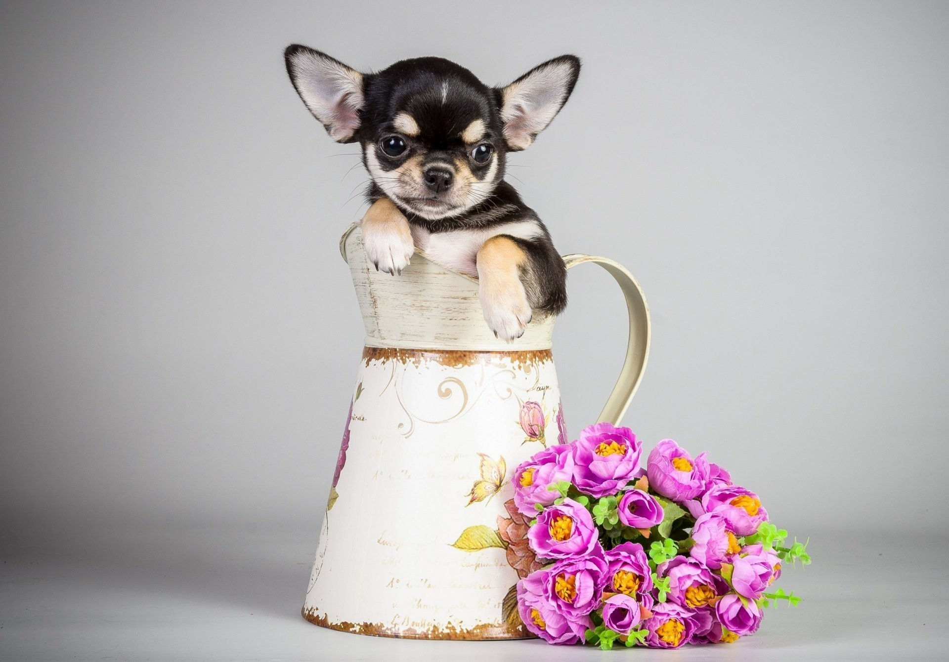 Puppies And Flowers Wallpapers 63 Images