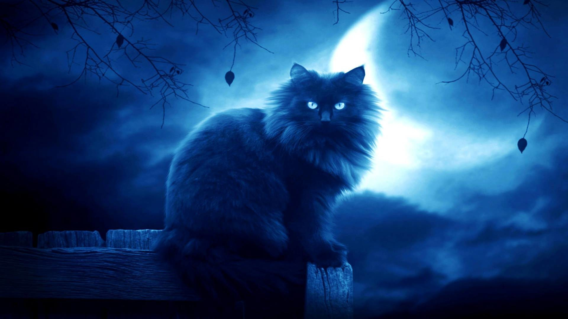 1920x1080 Elegant Look of Cat in Dark Moon Background