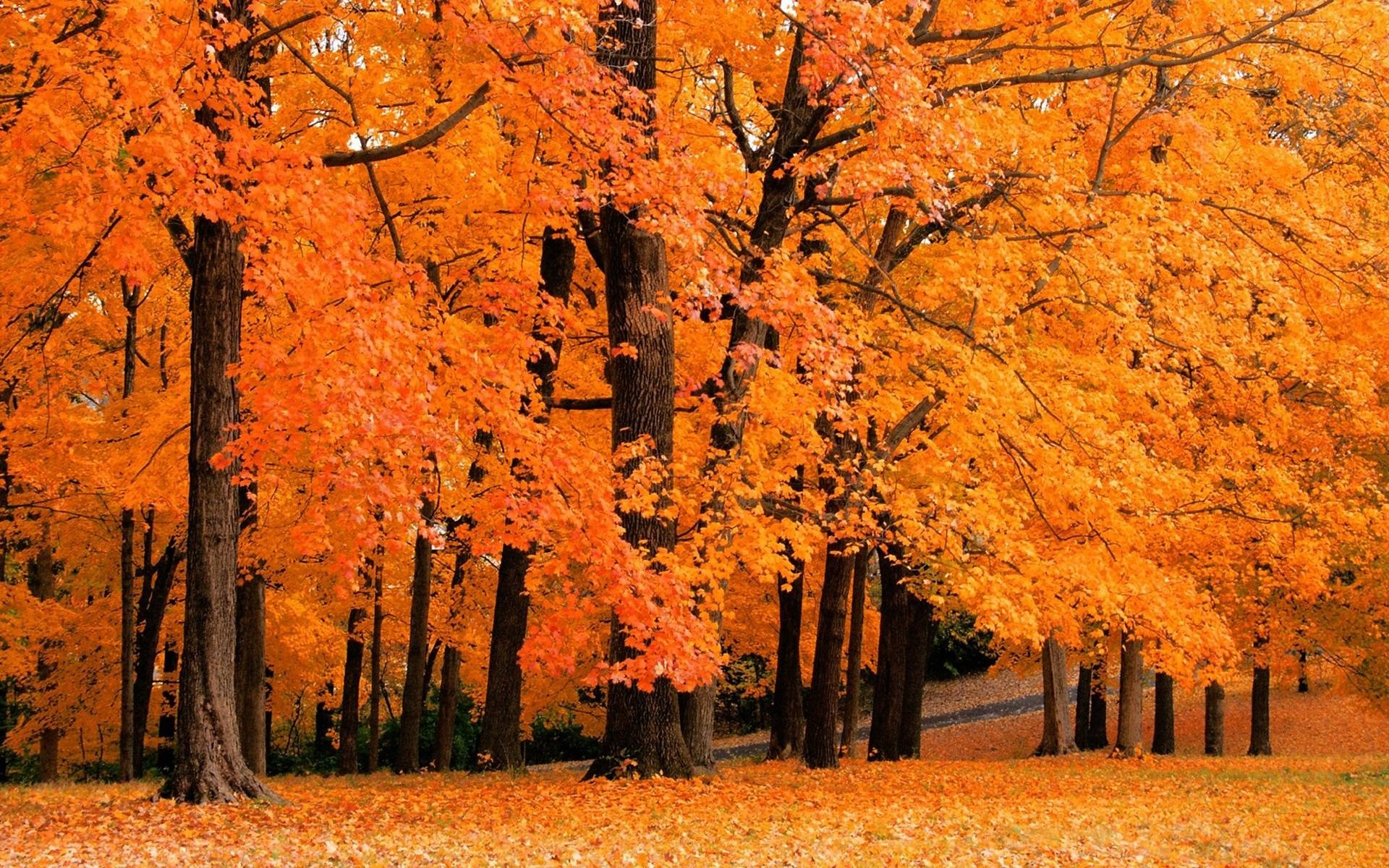 Cute Autumn Desktop Wallpaper 78 Images