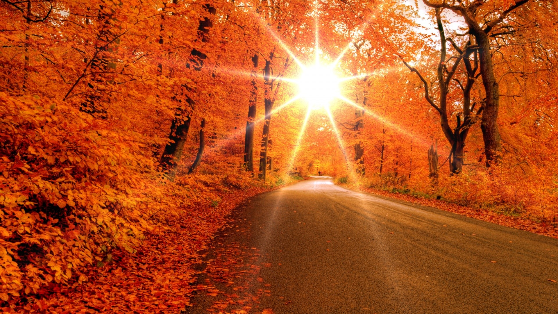 1920x1080 Beautiful Sunset On The Autumn Forest Wallpape Wallpaper .
