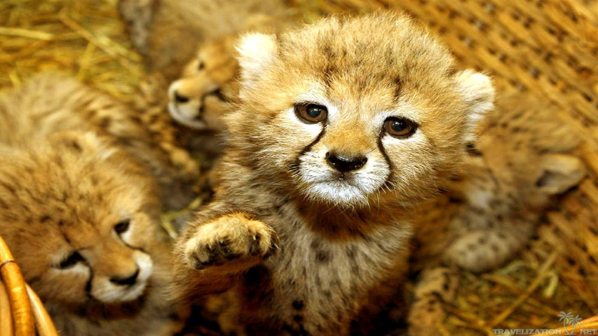 Collection Of Best Animal Wallpapers: Spring Baby Animals Desktop Wallpapers (48+ Images