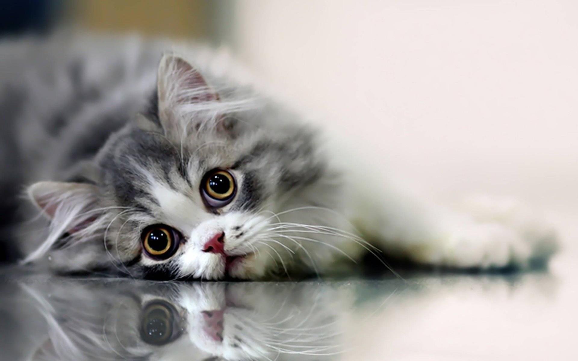 Cat hd wallpapers 1080p 64 images - Caterpillar wallpaper ...