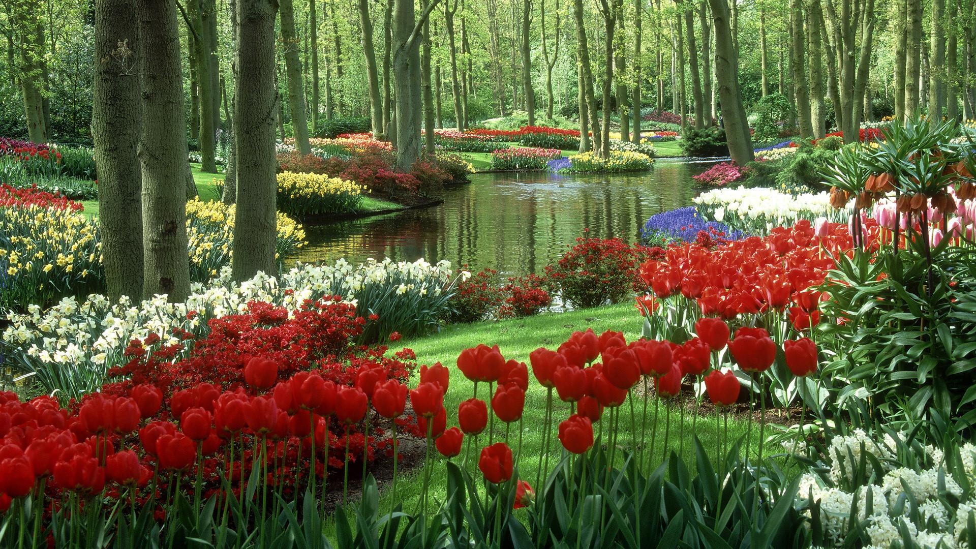 1920x1080 Rich flower garden HD wallpaper