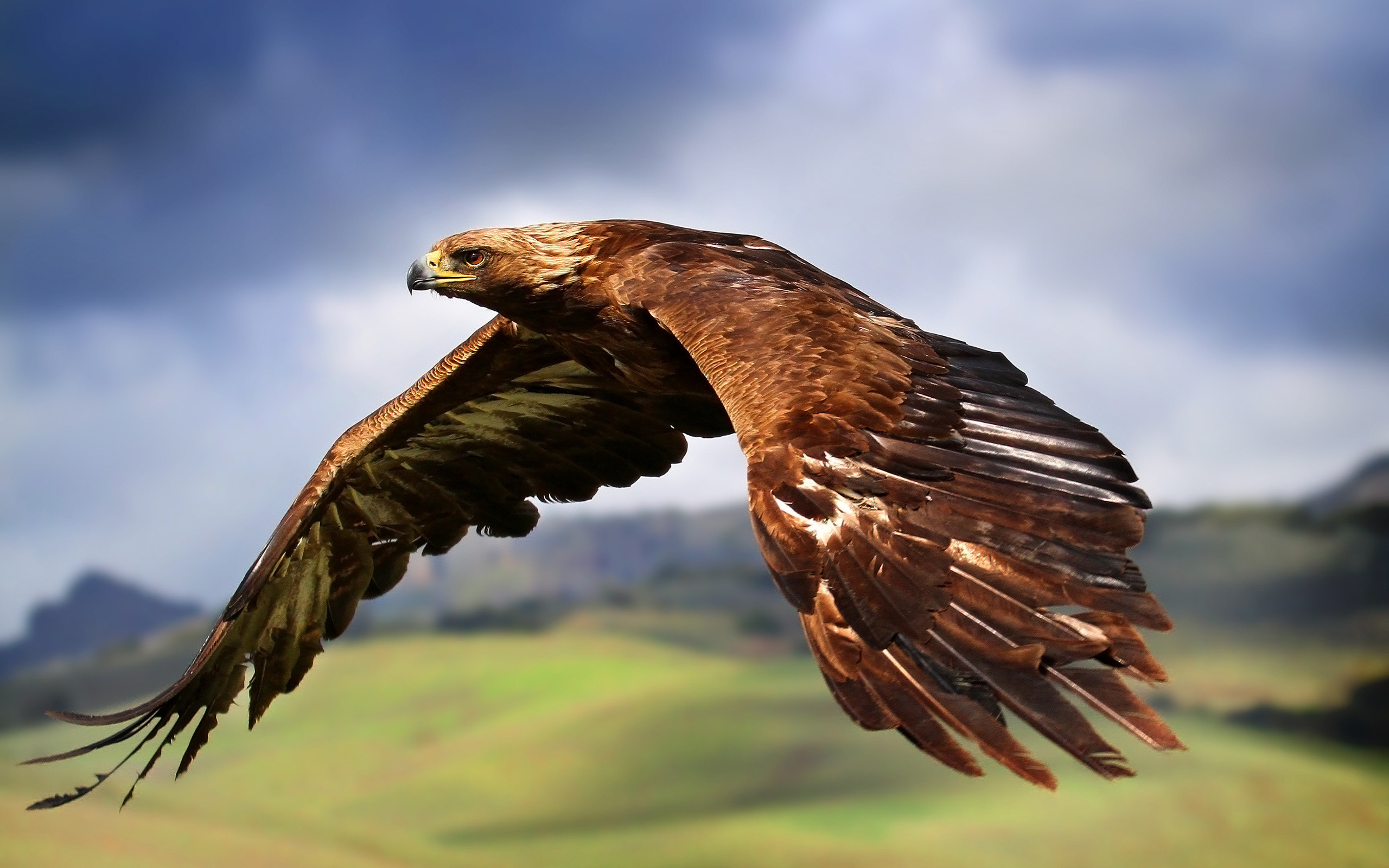2560x1600 Eagle Wallpapers HD