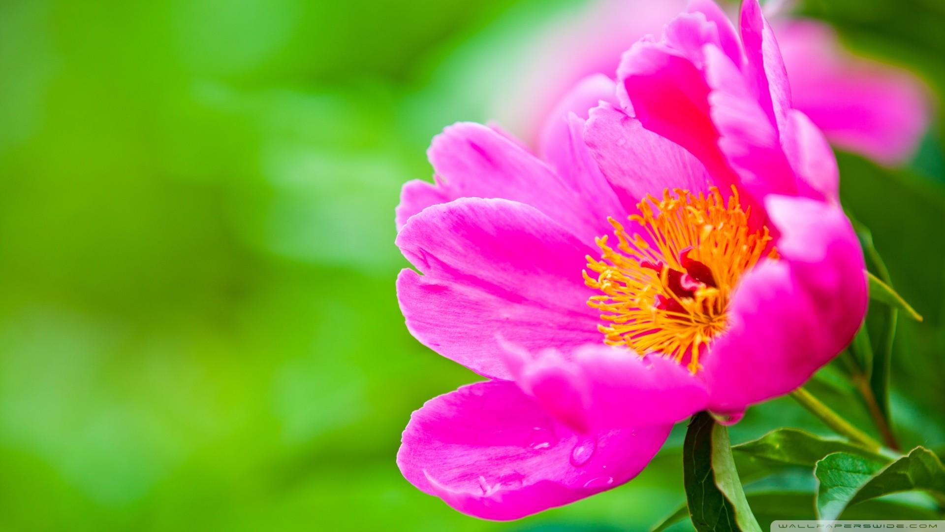 Pink Flower Wallpaper (74+ images)