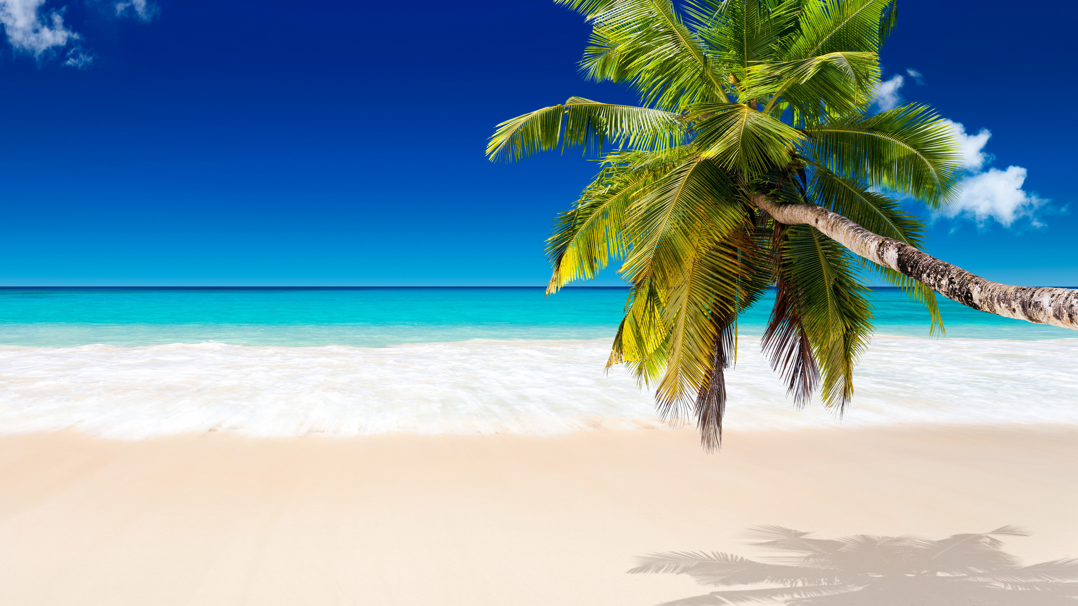 Tropical Beach Background (64+ Images