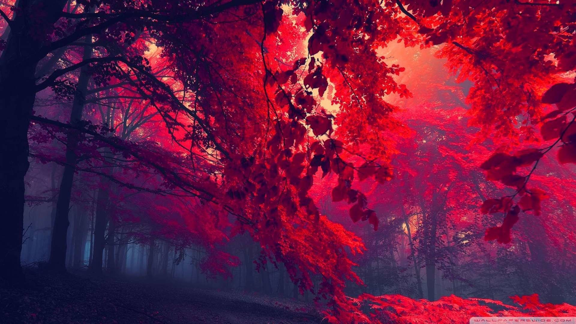 1920x1080 Wallpaper: Red Forest 4 Wallpaper 1080p HD. Upload at February 25 .