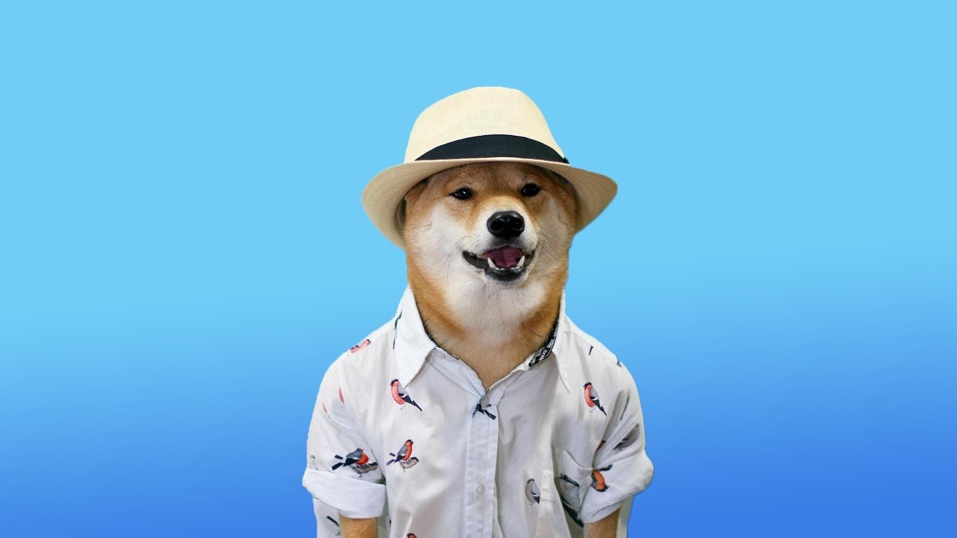 Doge windows background