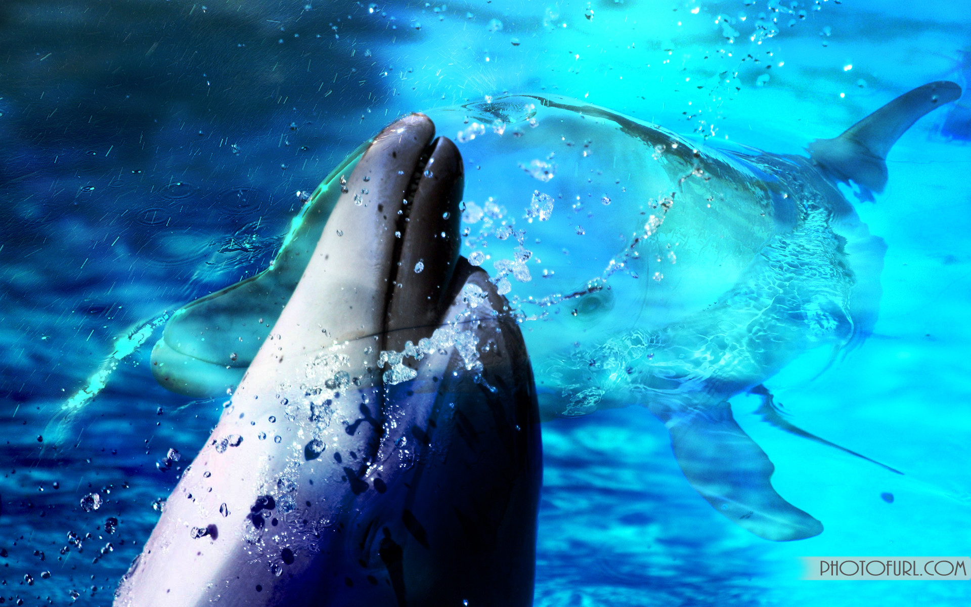 Animated Dolphin Screensavers Wallpaper 46 images