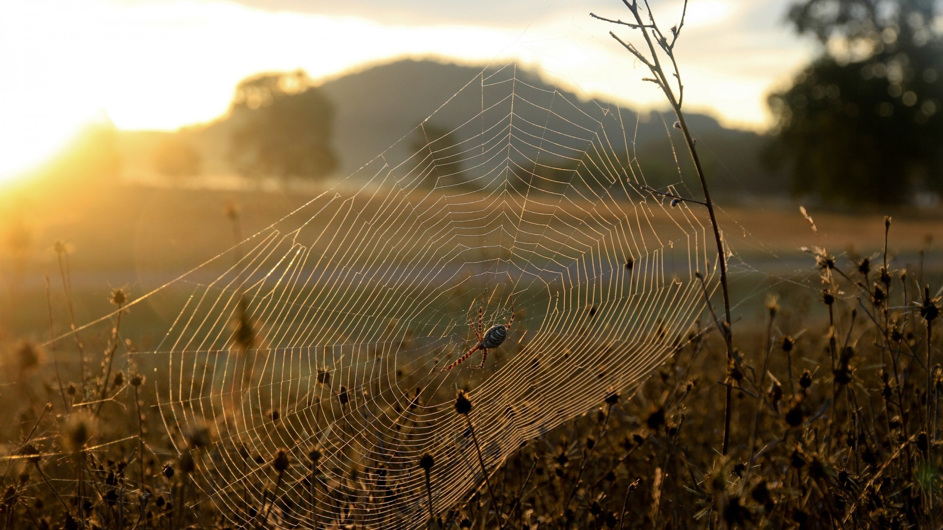 1920x1080  Wallpaper spider, web, sun, light, grass, dry, faded