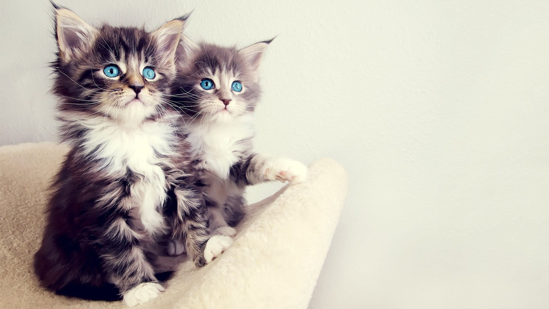 Cute kitten desktop wallpaper 60 images - Kitten wallpaper hd ...