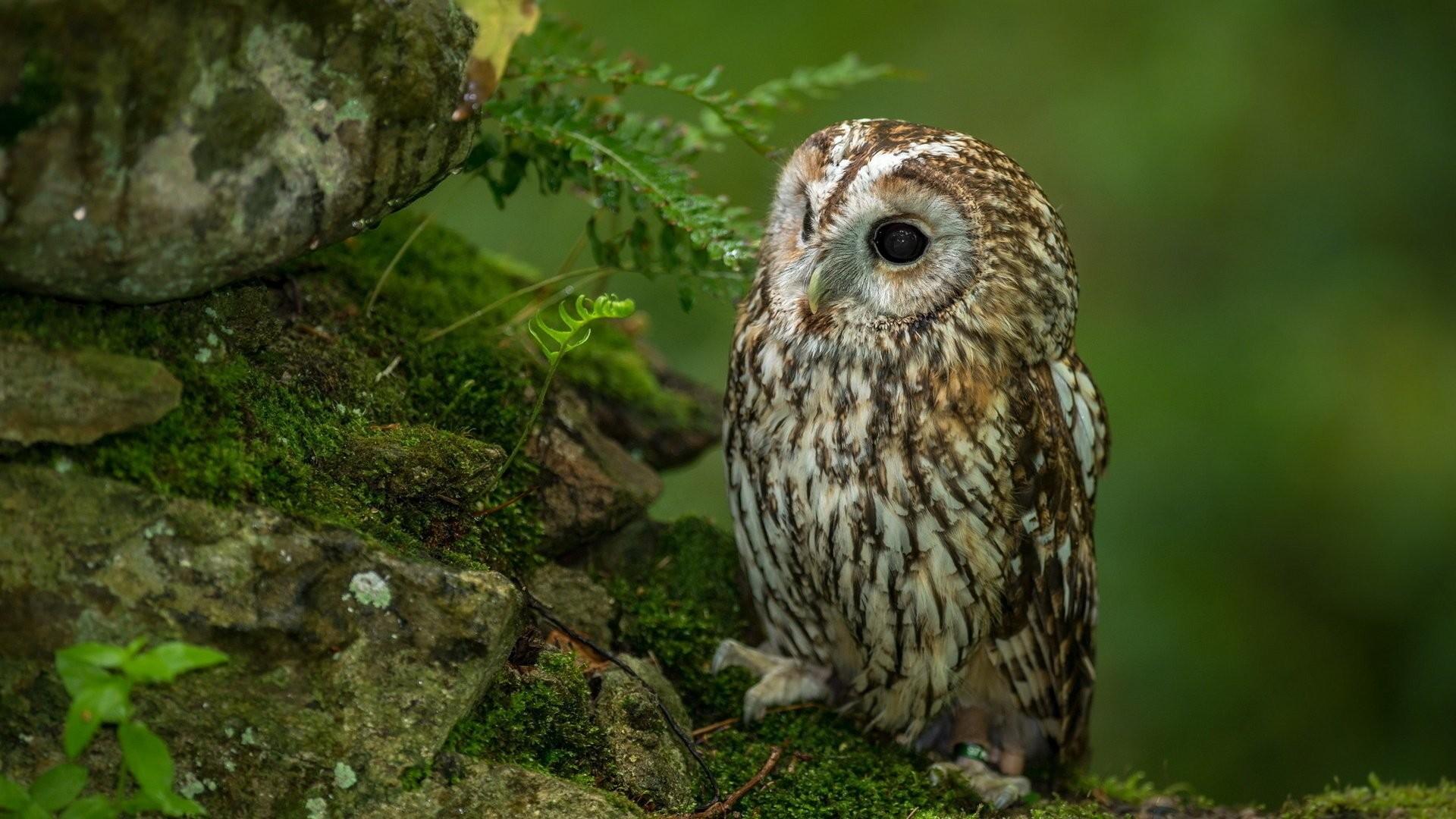 white owl wallpaper 65 images