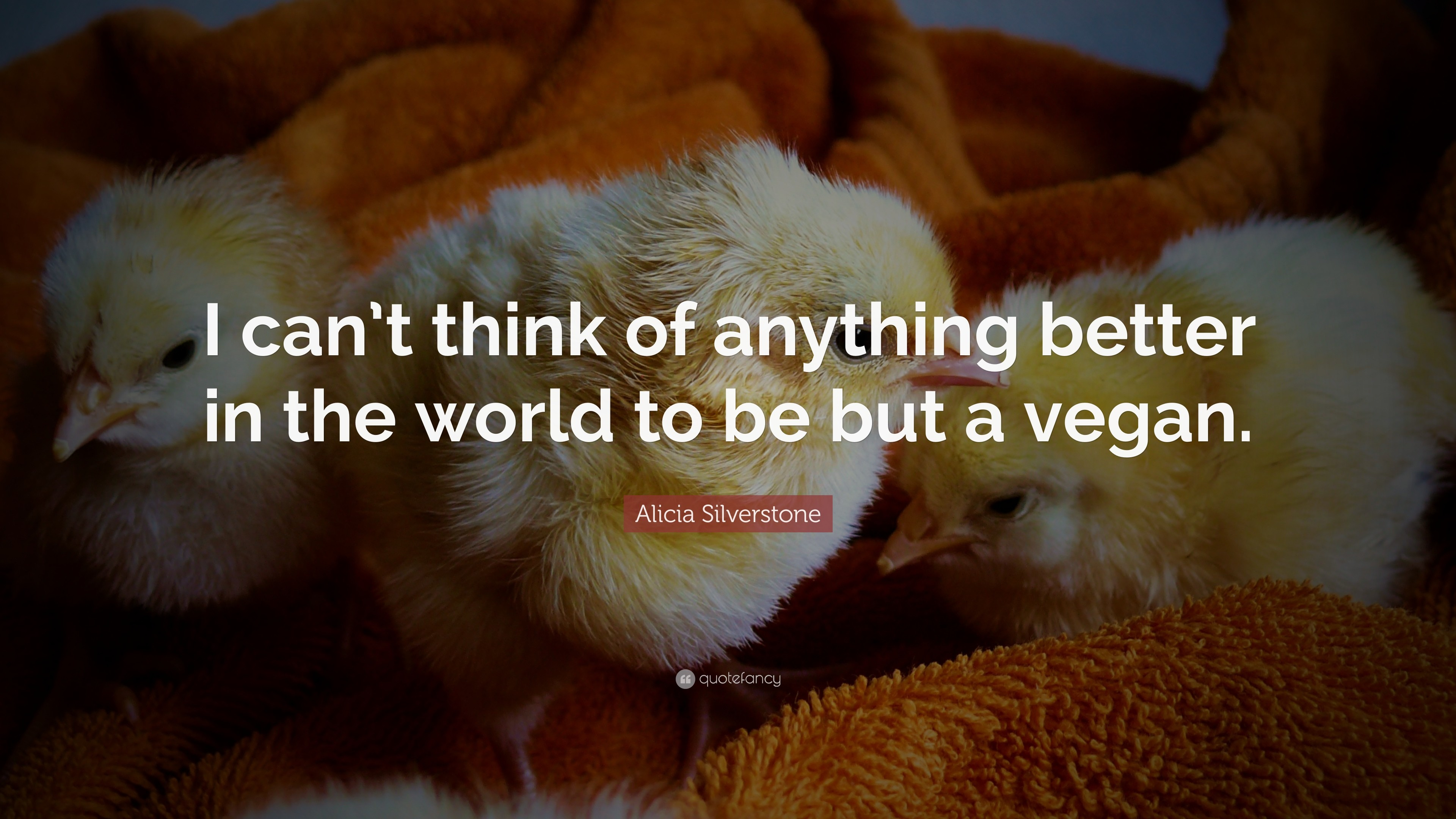 "3840x2160 Alicia Silverstone Quote: ""I can't think of anything better in the world"
