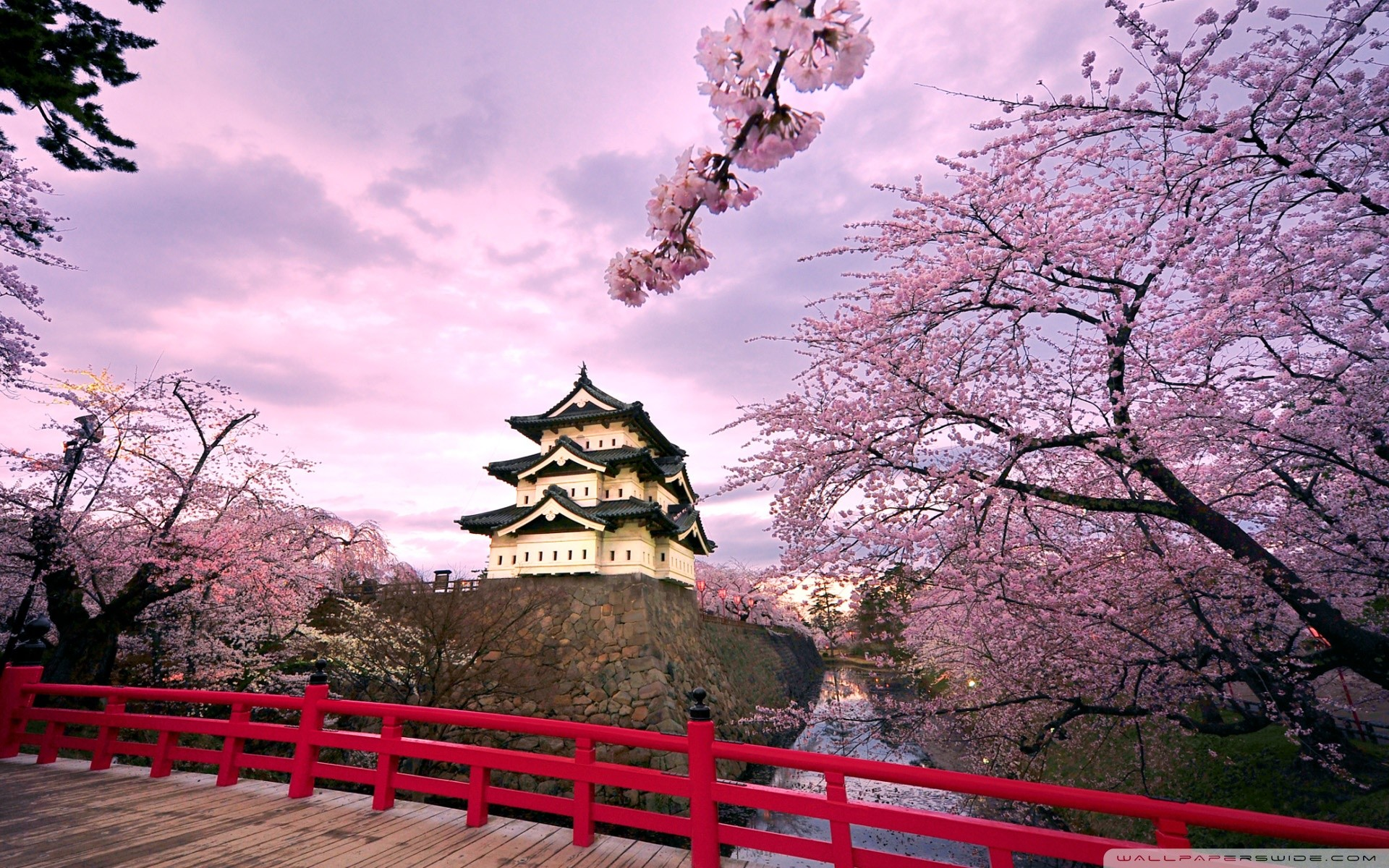 japanese cherry blossom wallpaper  71  images