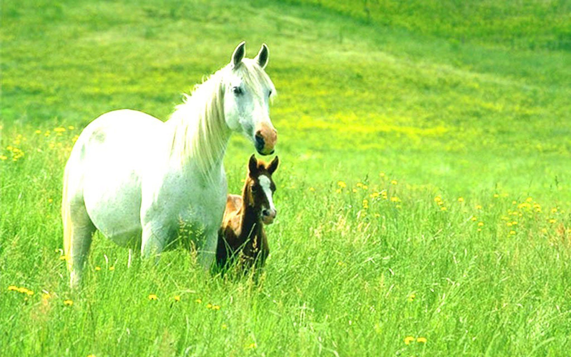 Beautiful horses pictures wallpapers the best of pictures 2017 horse wallpapers hd quality backgrounds d voltagebd Image collections
