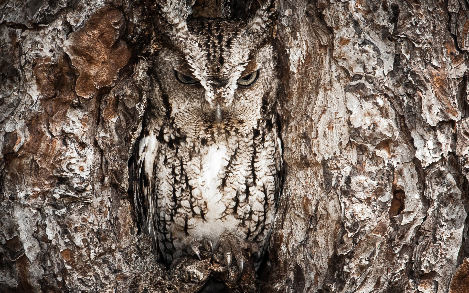 1920x1200 realtree camouflage owl animal hd wallpapers Wallpaper HD