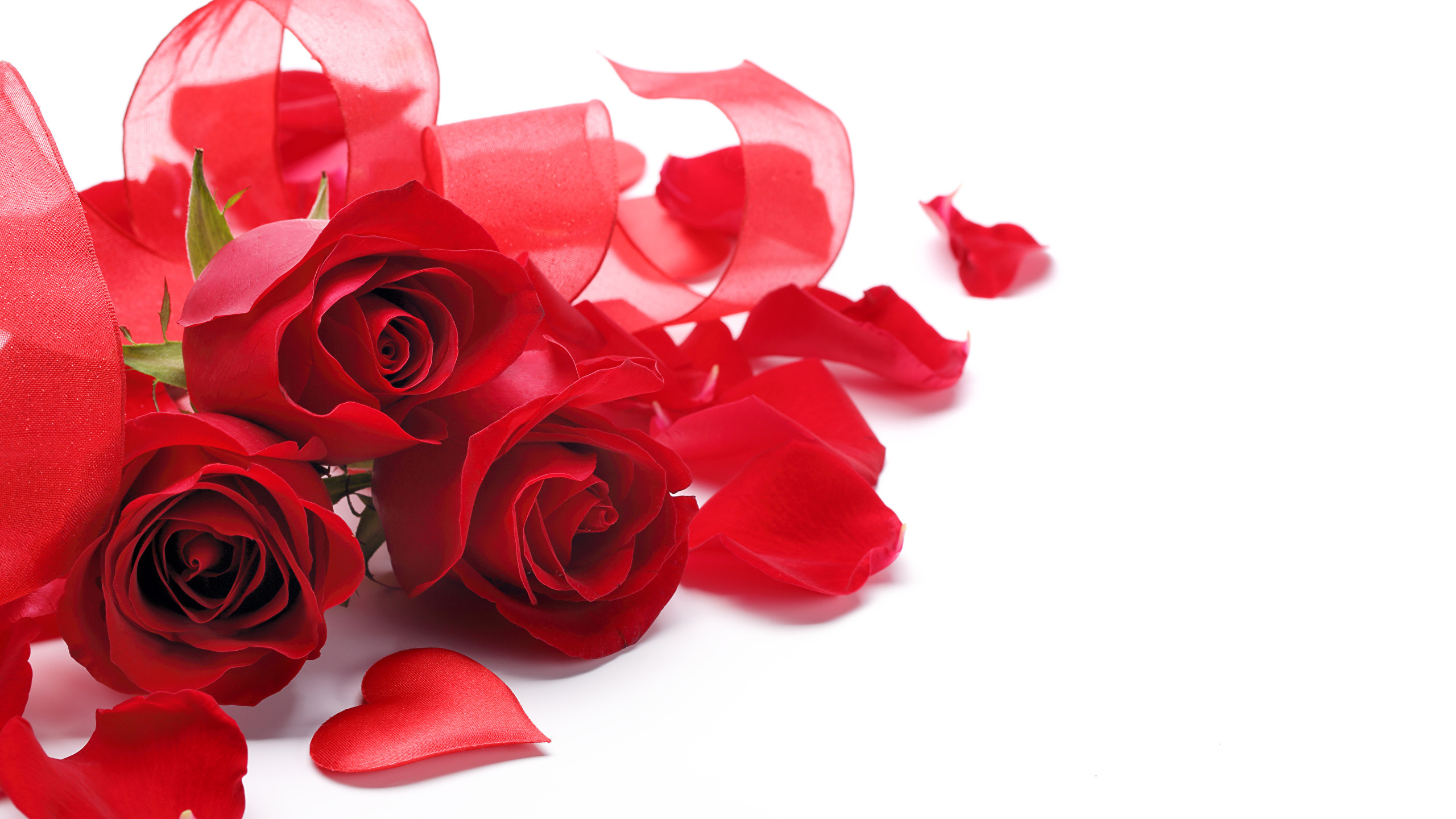 2560x1440 Pictures Heart Red Roses Petals Flowers Three 3 White background