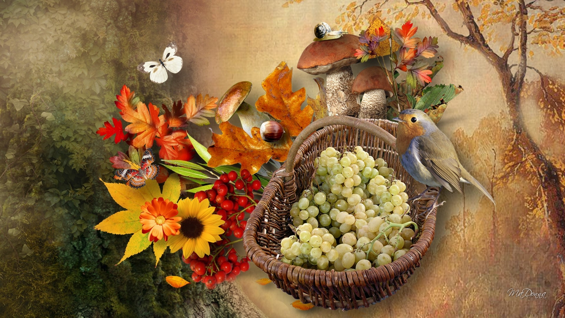 Images of fall flowers and leaves flowers healthy beautiful fall flowers wallpaper 50 images izmirmasajfo