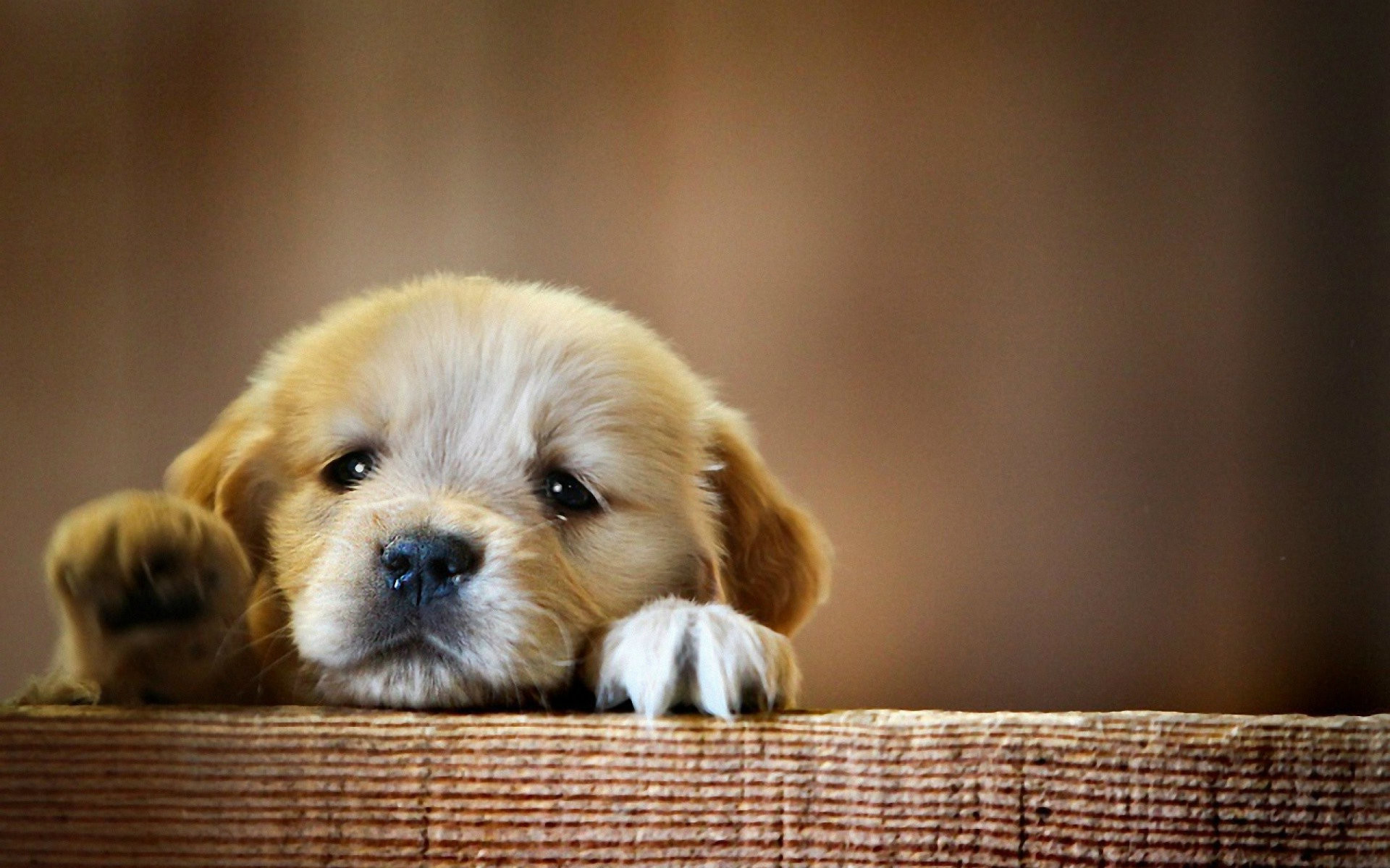 Cute Dogs Wallpapers 61 Images