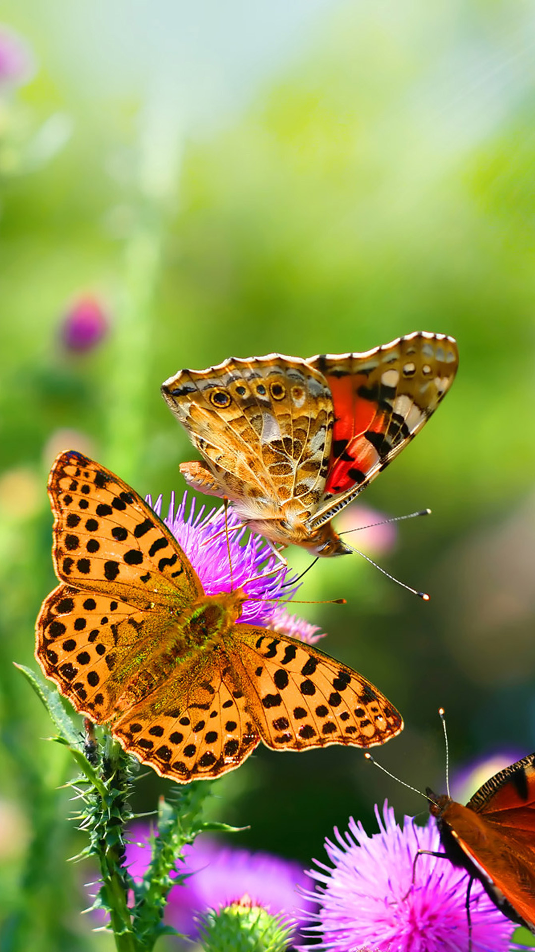 1080x1920 101 best Hd Walpaper (hd-wallpapersdownload.com) images on ... Tiger  Swallowtail Butterfly Wallpaper ...