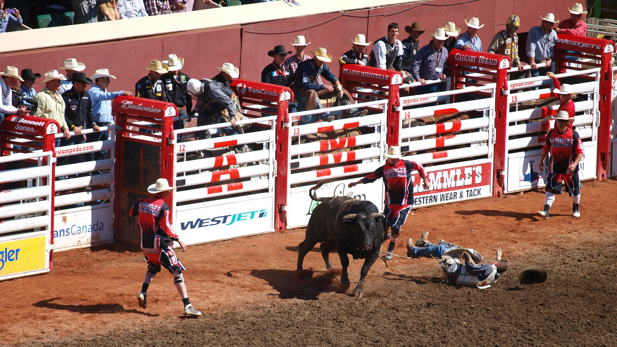 Bull riding wallpapers 62 images - Bull riding wallpapers ...
