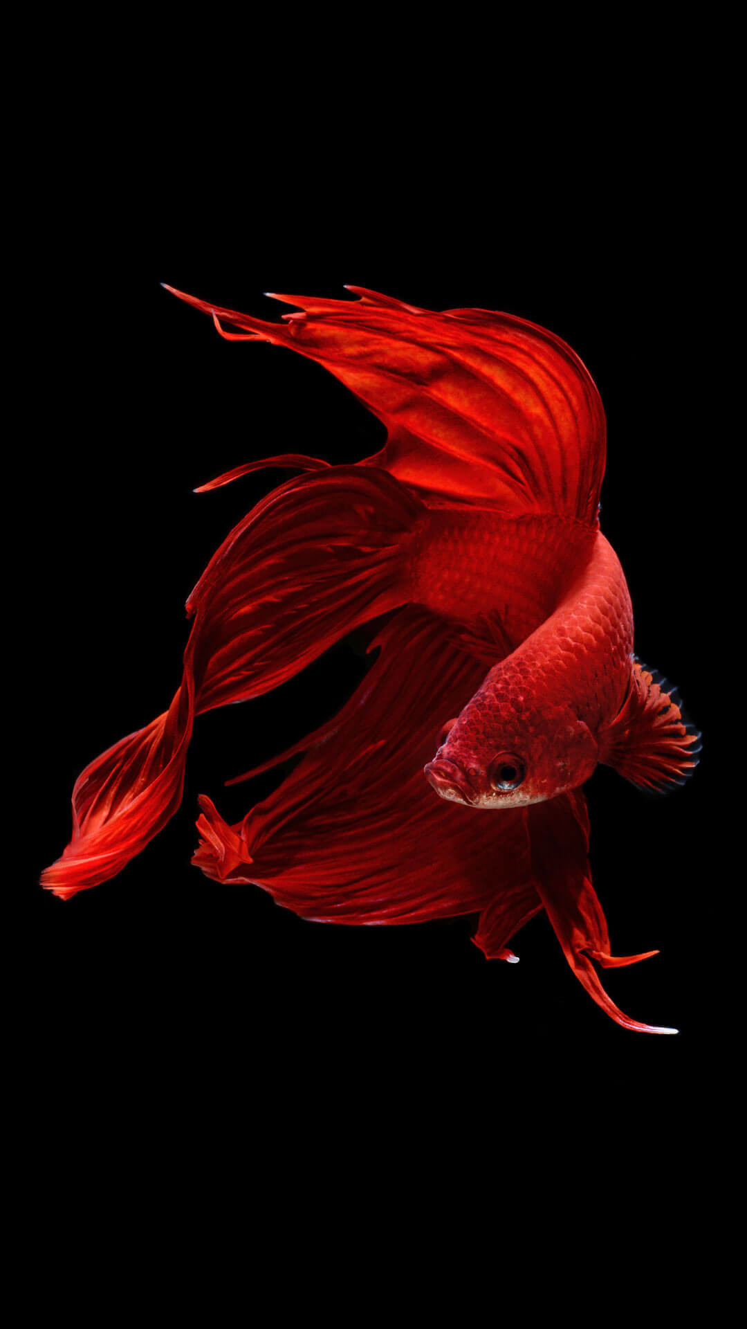 Red Fish Wallpaper (64+ images)
