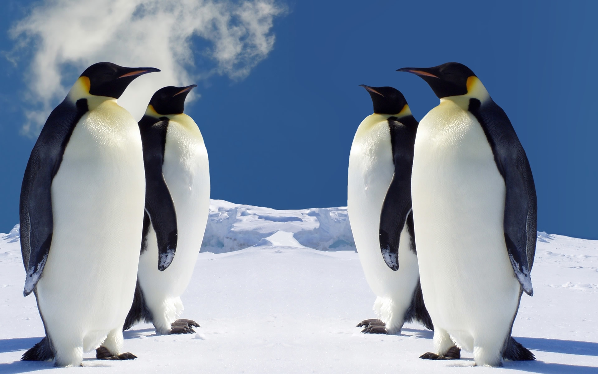 1920x1200 Download Free HD Penguin Wallpaper for Windows
