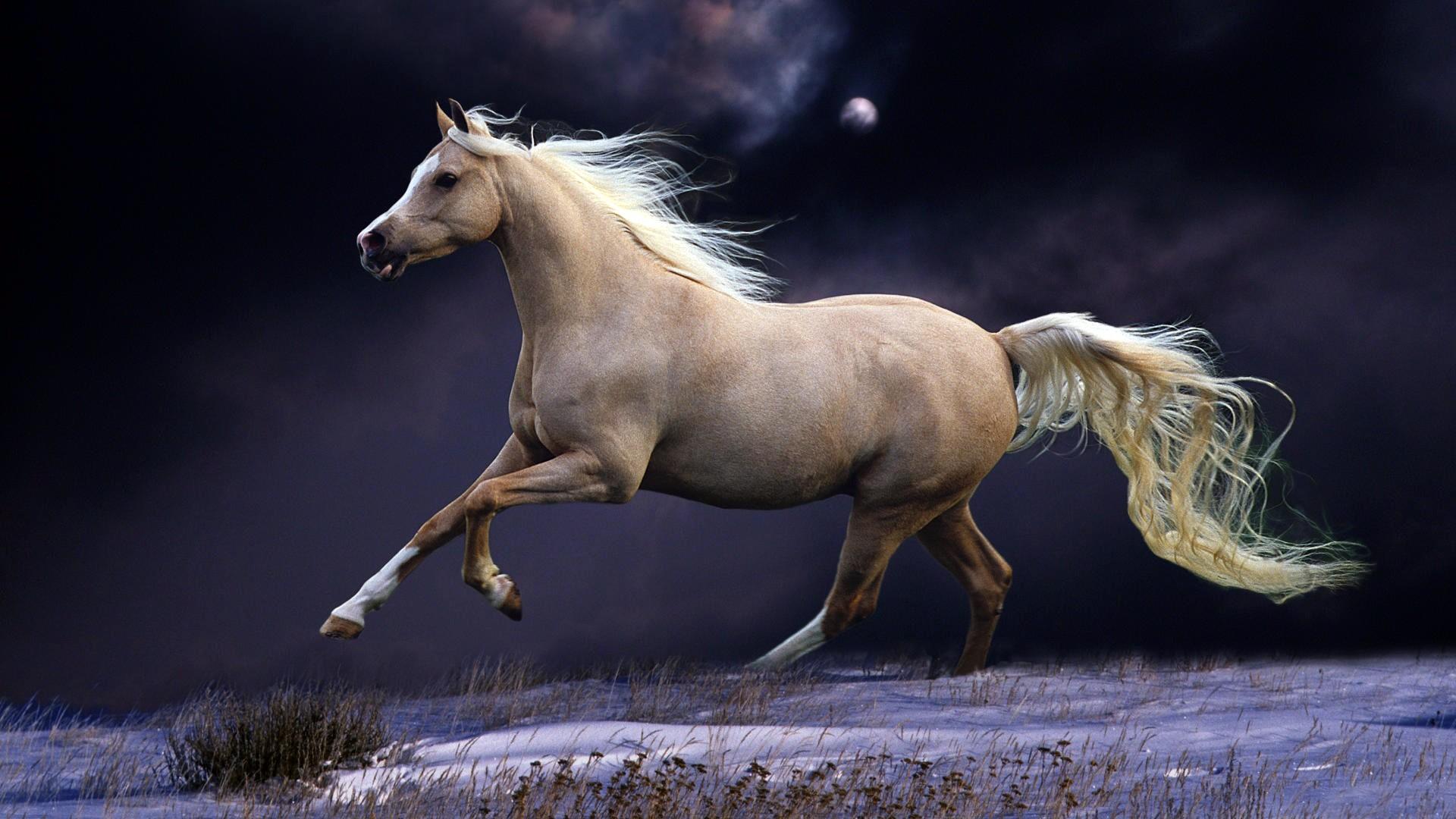 Beautiful Horse Wallpaper 66 Images