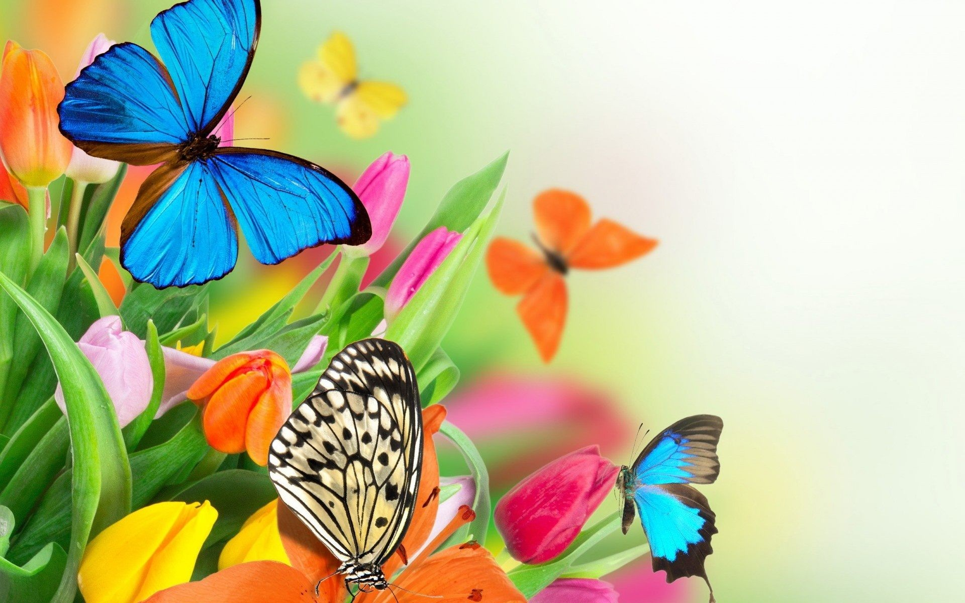 1920x1200 Flowers & Butterflies - flowers, spring, frame, colorful .
