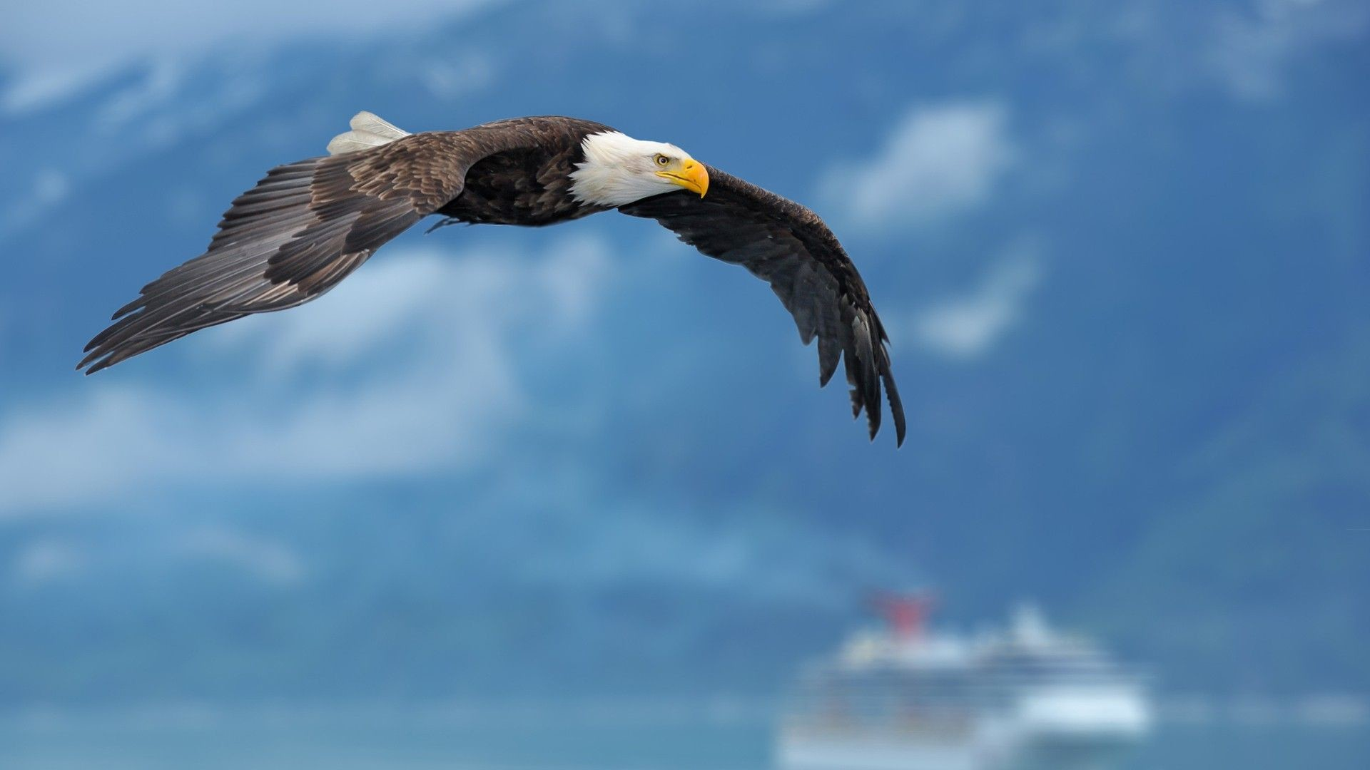 1920x1080 Bald Eagle Flying Over Mountains HD desktop wallpaper High | HD Wallpapers  | Pinterest | Eagle wallpaper, Hd wallpaper and Wallpaper