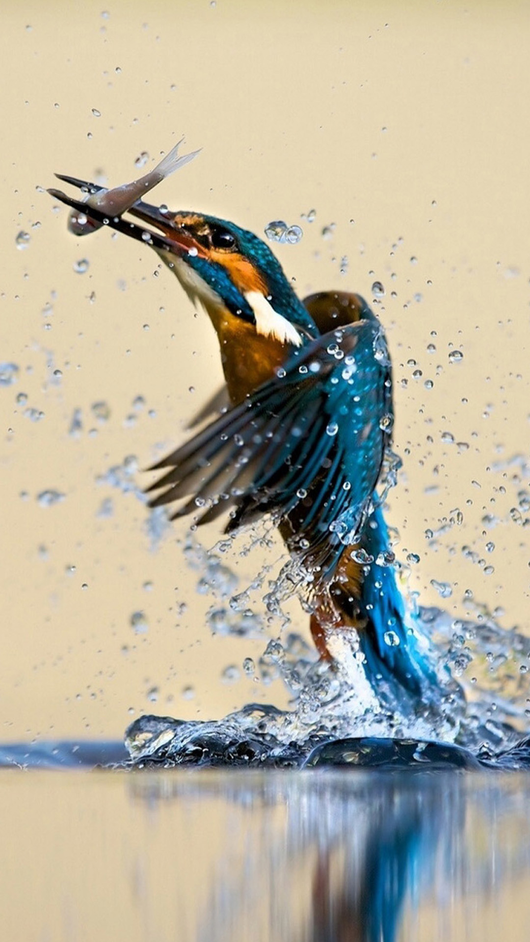1080x1920 Kingfisher Catching Fish