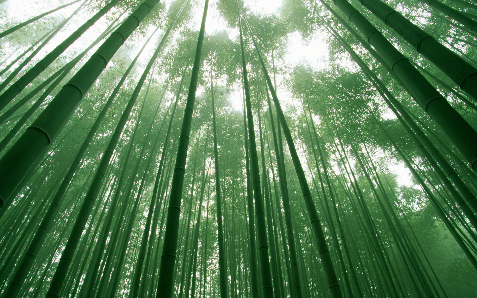 1920x1200 Bamboo Desktop Wallpapers