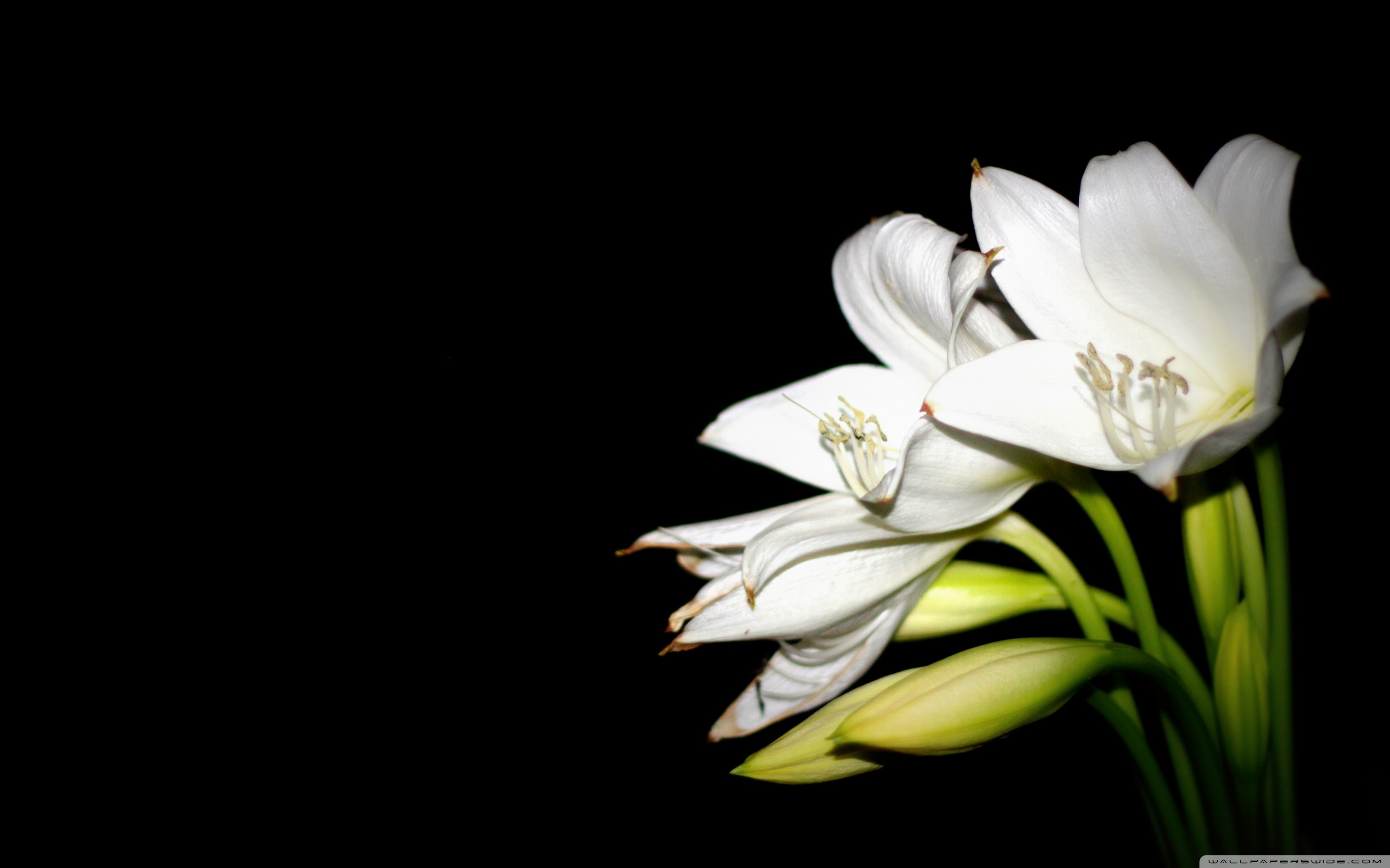 2880x1800 Wide 1610 Easter Lilies Background