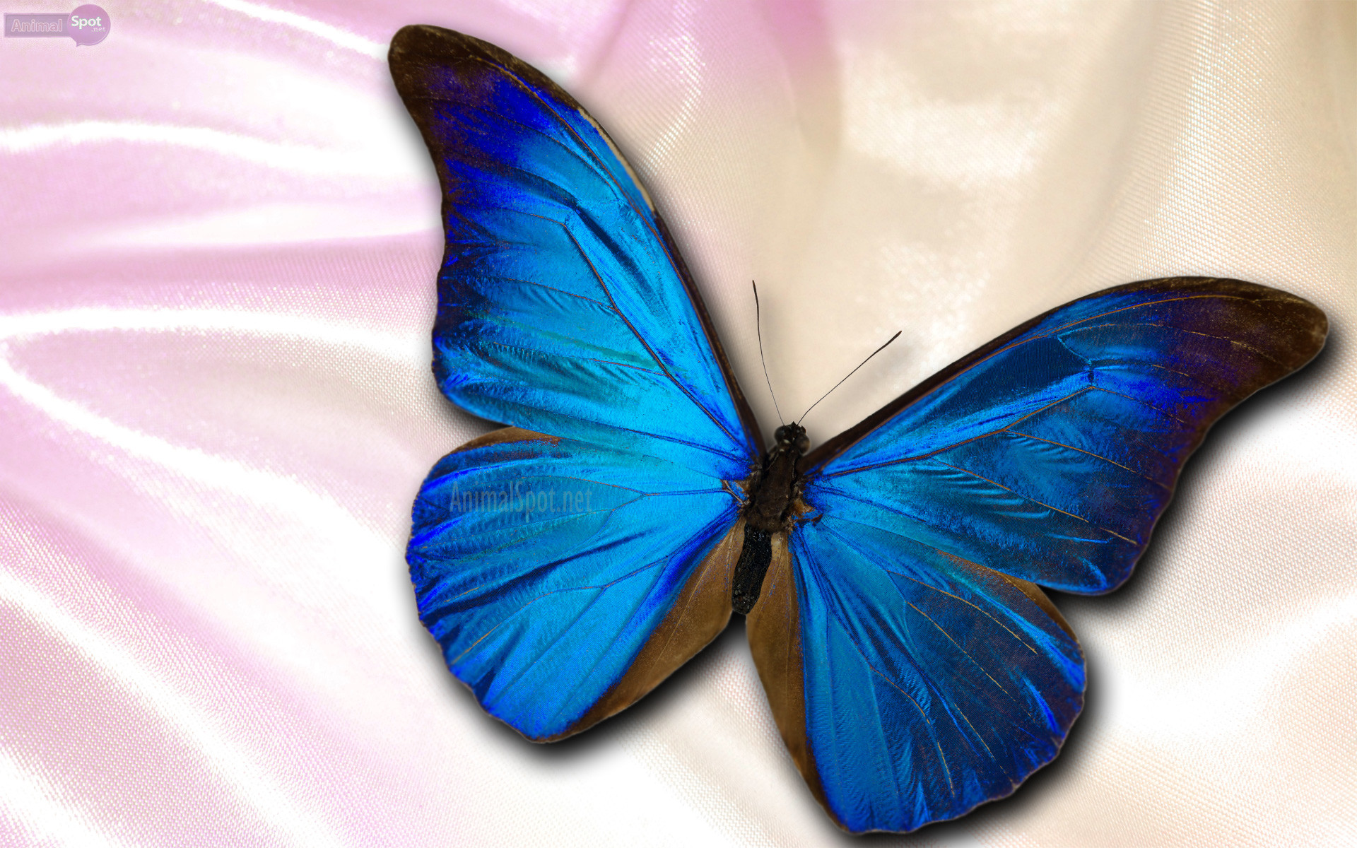 Butterfly Hd Wallpaper 68 Images