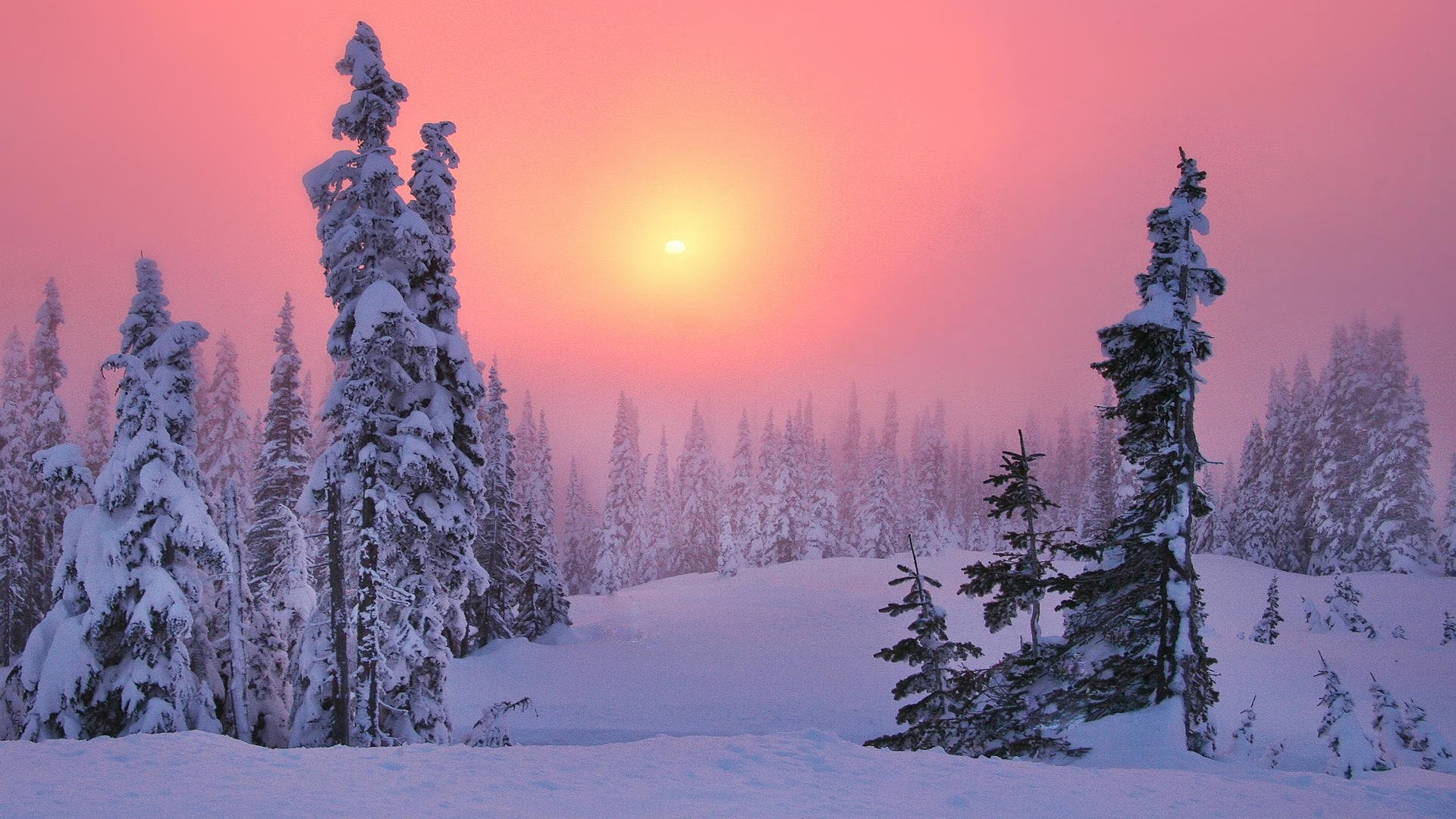 1920x1080 Pink Winter 529885. UPLOAD. TAGS: Wonderland Albums Widescreen Background  Winter Landscapes