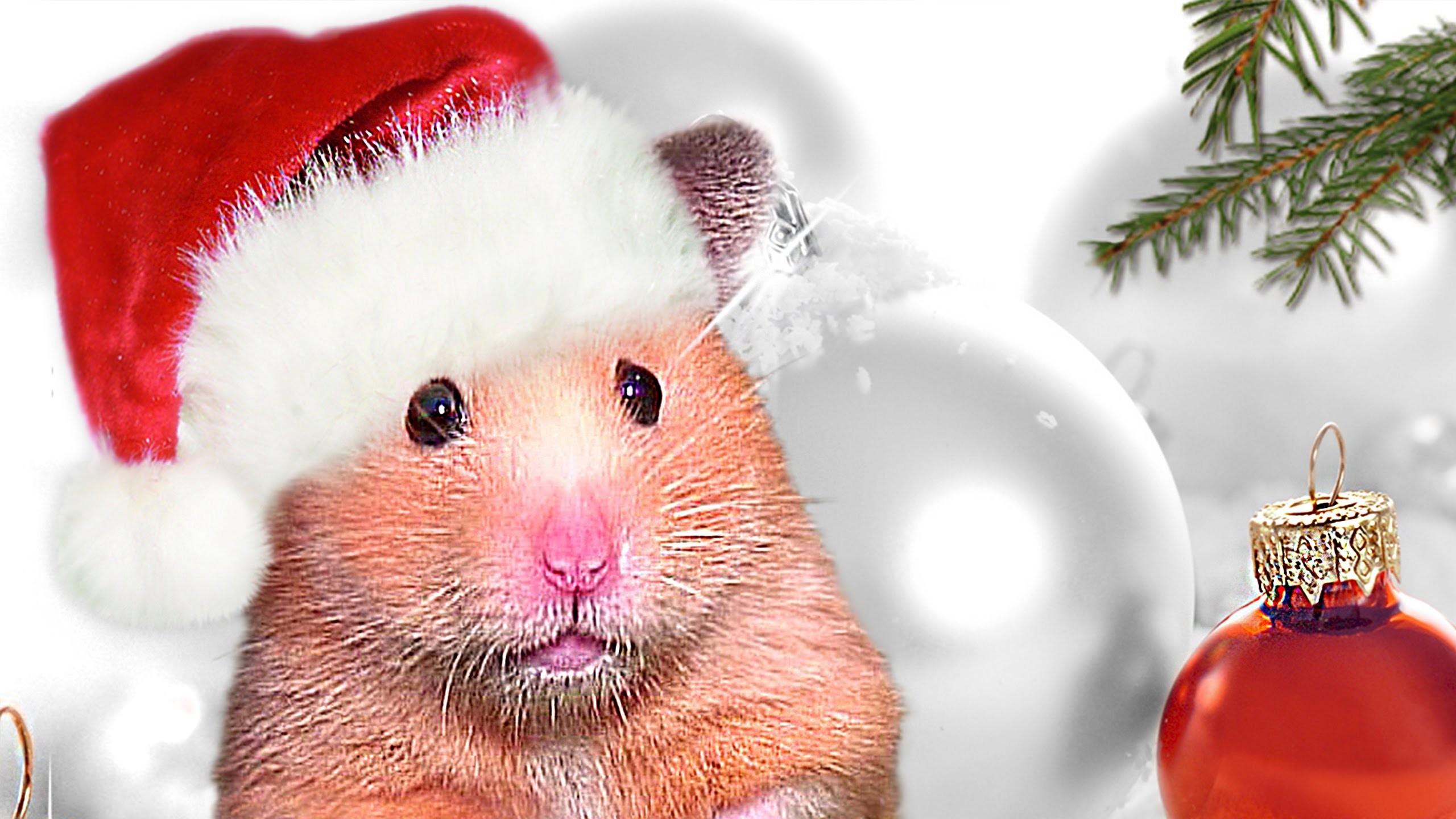 Www.Hamster X