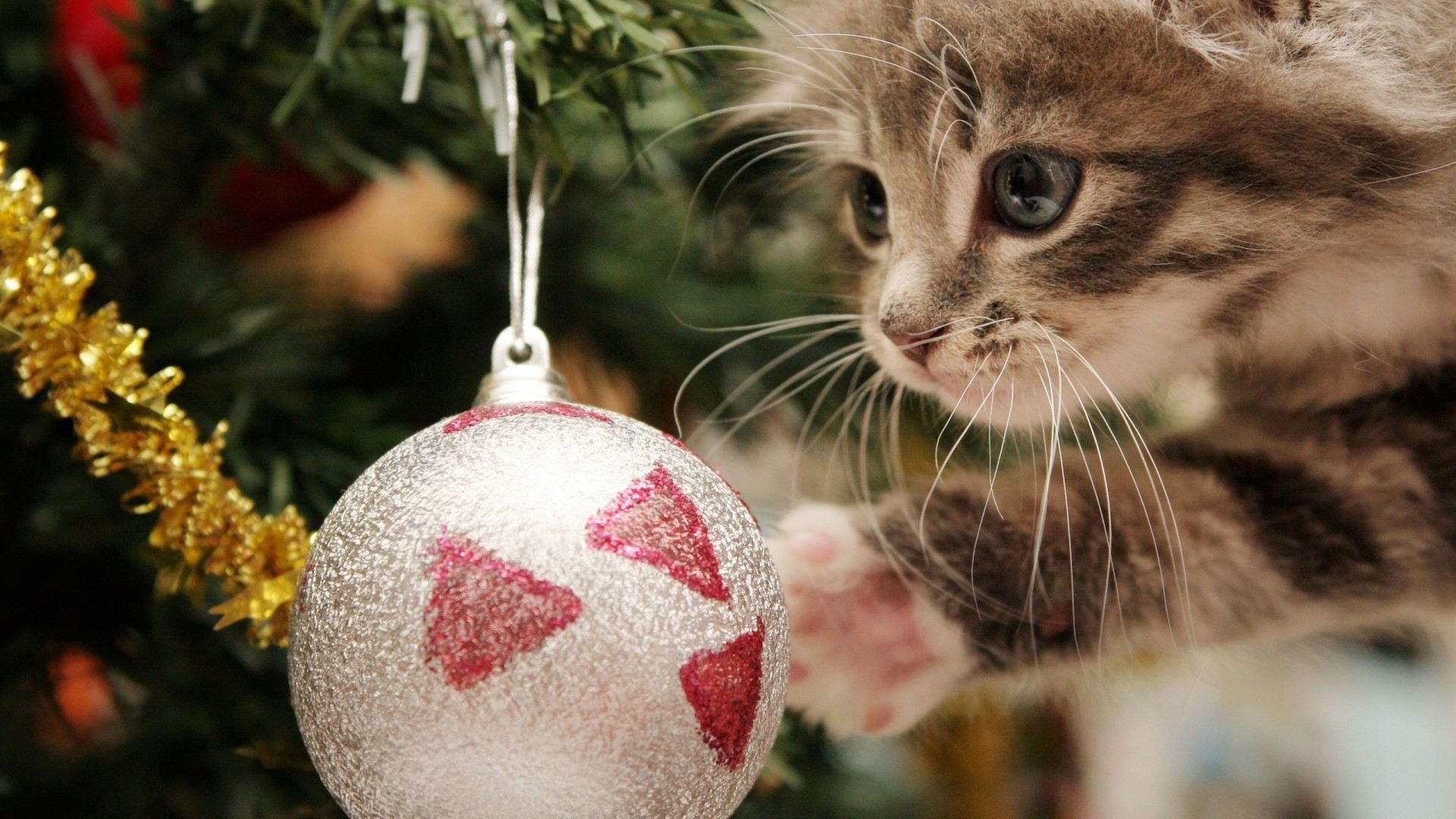 1920x1080 cute christmas desktop wallpaper ; Super-Cute-Christmas-Cat-Full-HD